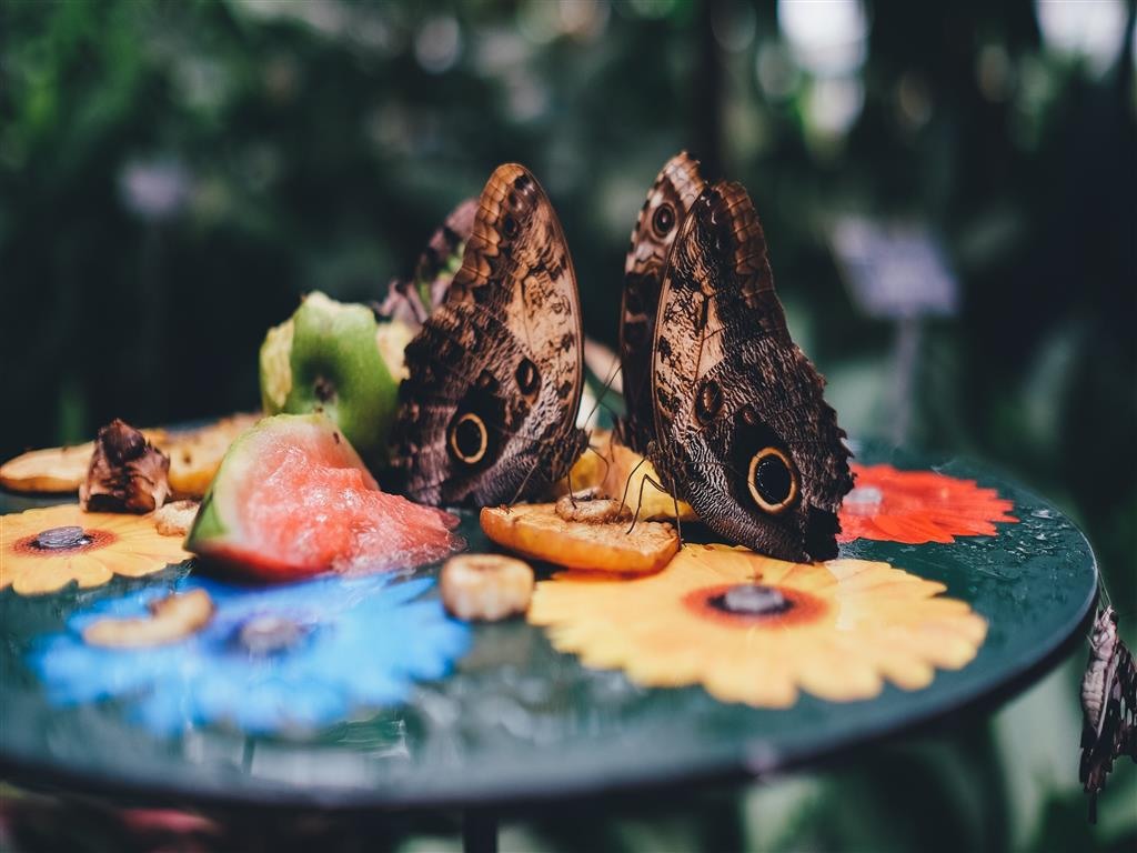 1024x768 Butterflies on Fruit Table 4K Wallpaper