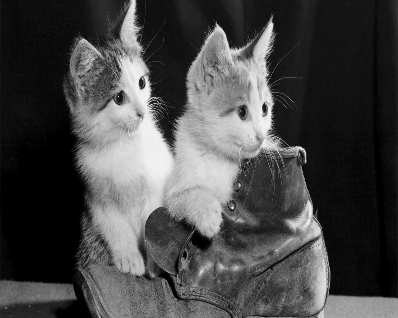 1280x1024 Cute Little White Cat on Shoes