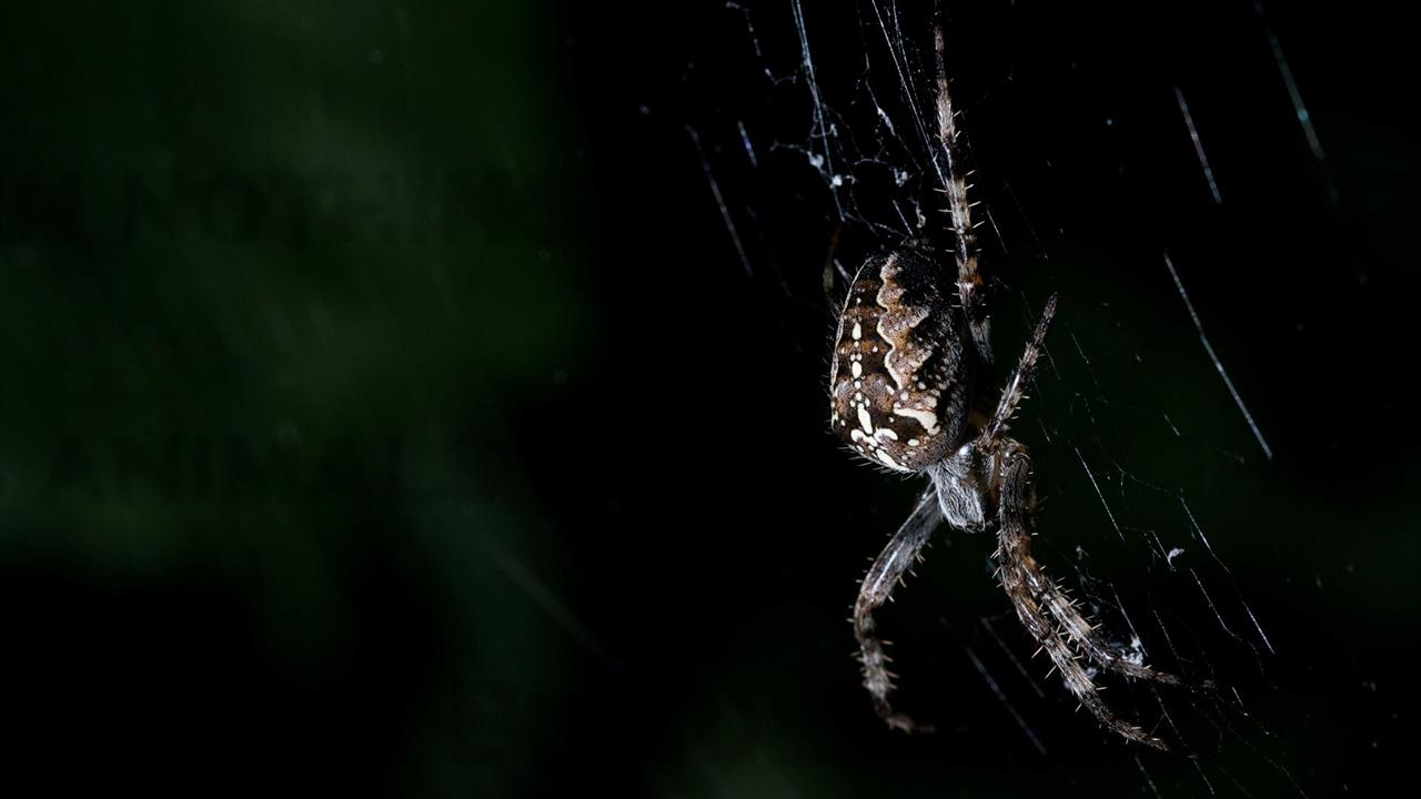 1280x720 Night Photography of Spider