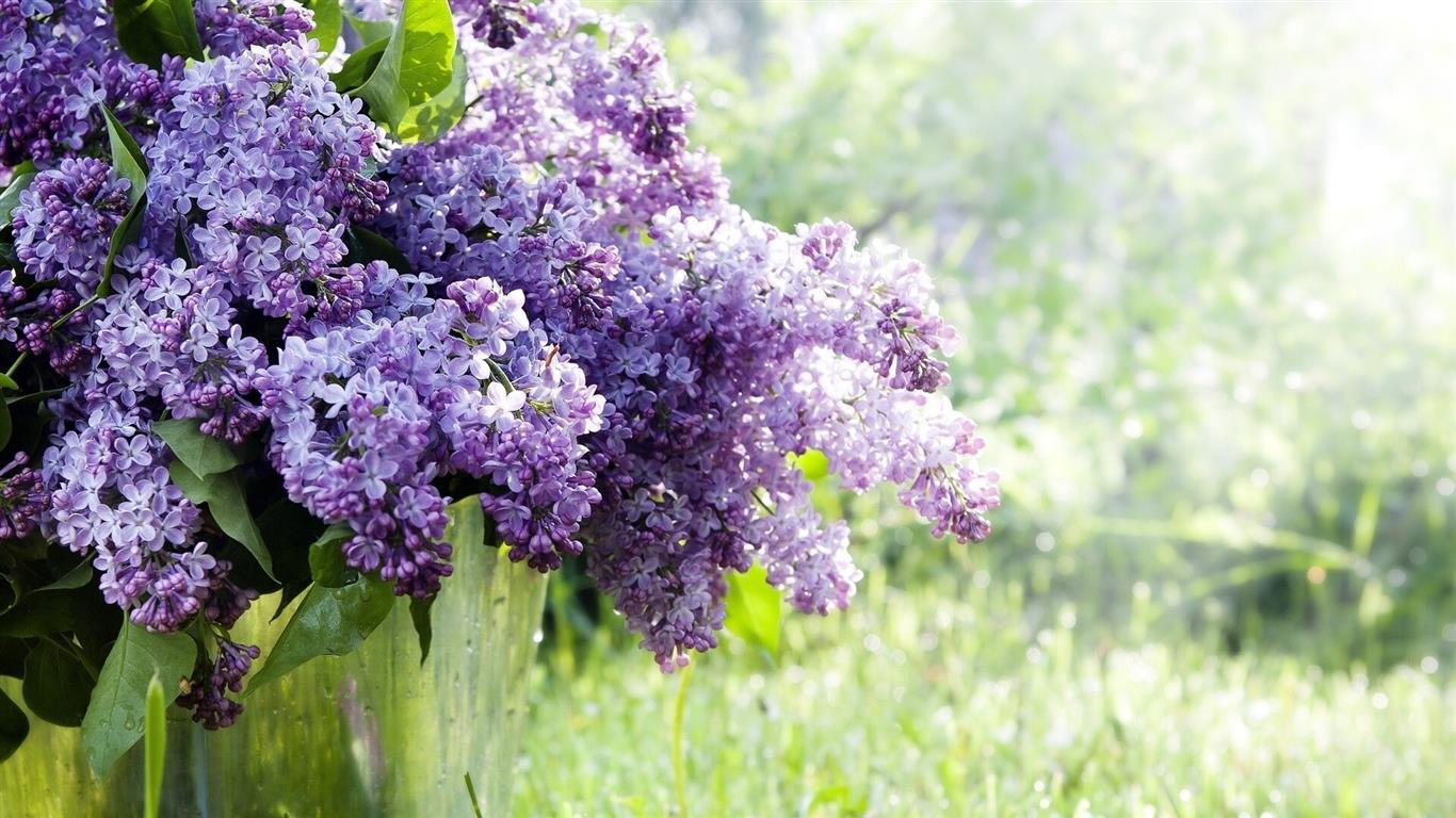 1366x768 Lilac Purple Flowers HD Photos