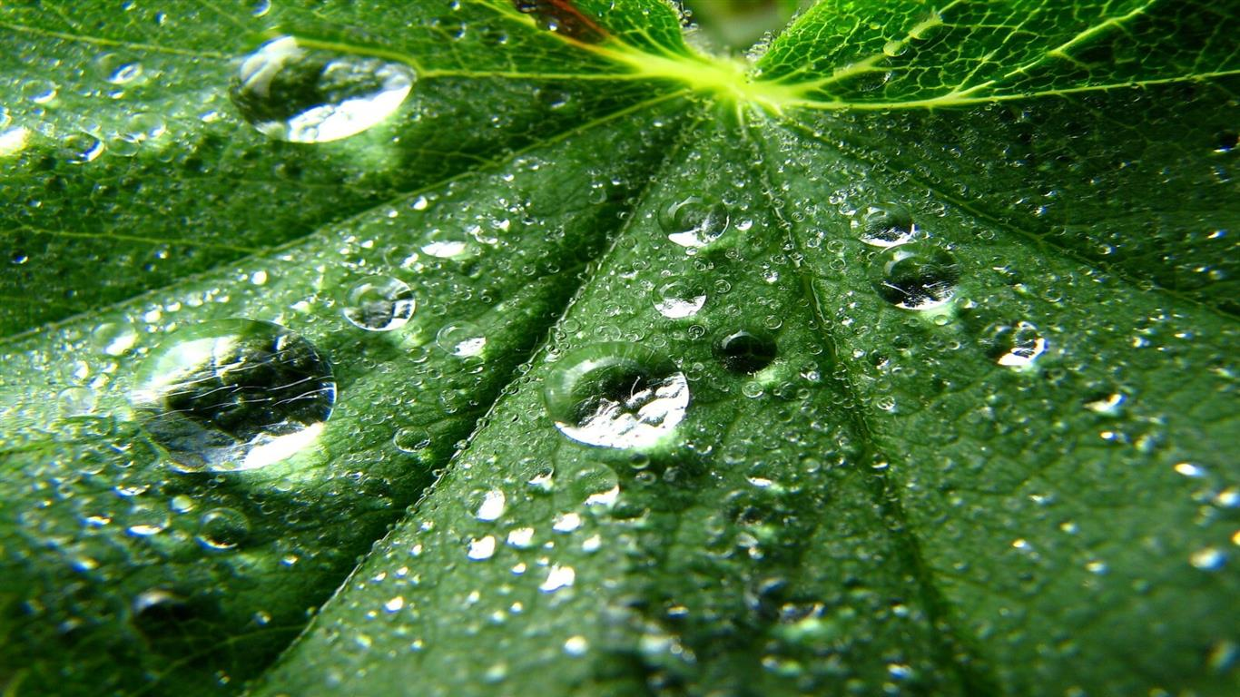 1366x768 Water Drops on Leaf 3D Pic