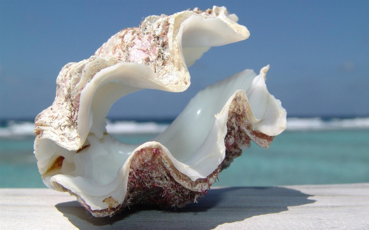 1440x900 Beautiful Sea Shell on Beach HD Wallpapers