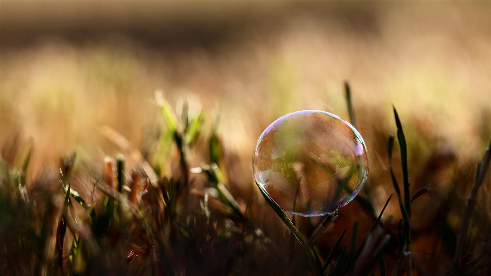 1600x900 3D Bubble in Grass Wallpaper