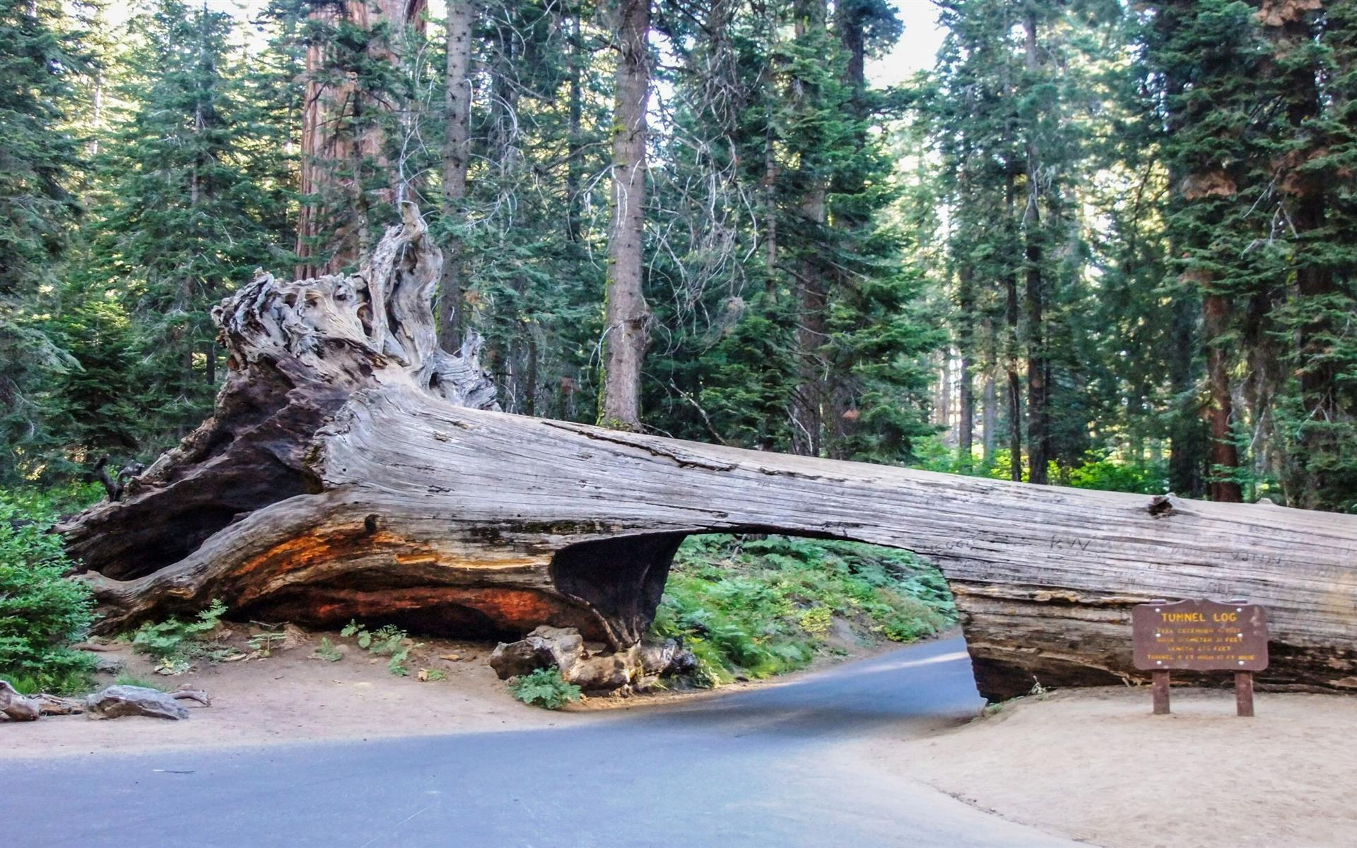 1920x1200 Sequoia National Park California US Tourist Wallpaper