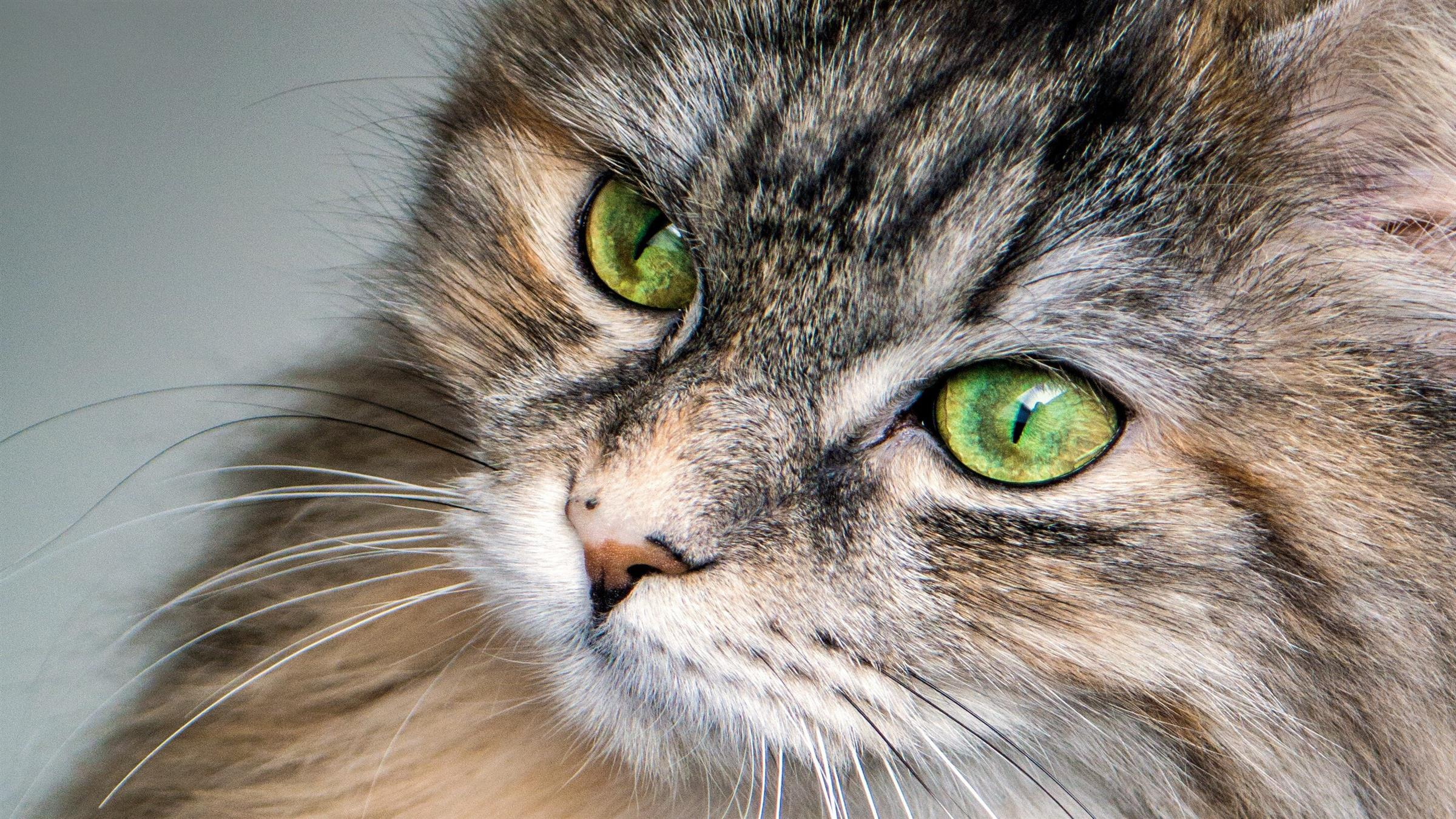 2400x1350 Furry Green Eyed Cat