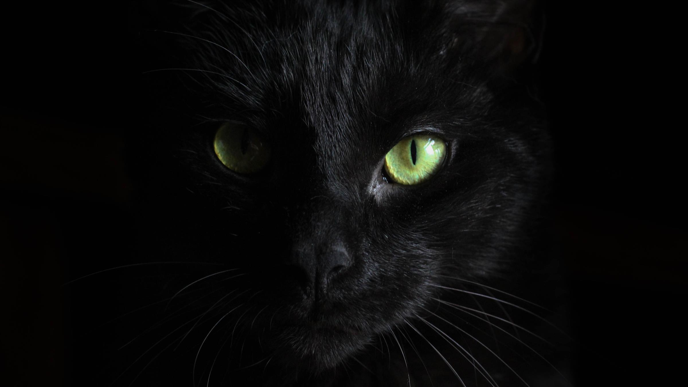 2400x1350 Yellow Eye of Black Cat Dangerous 5K Photo