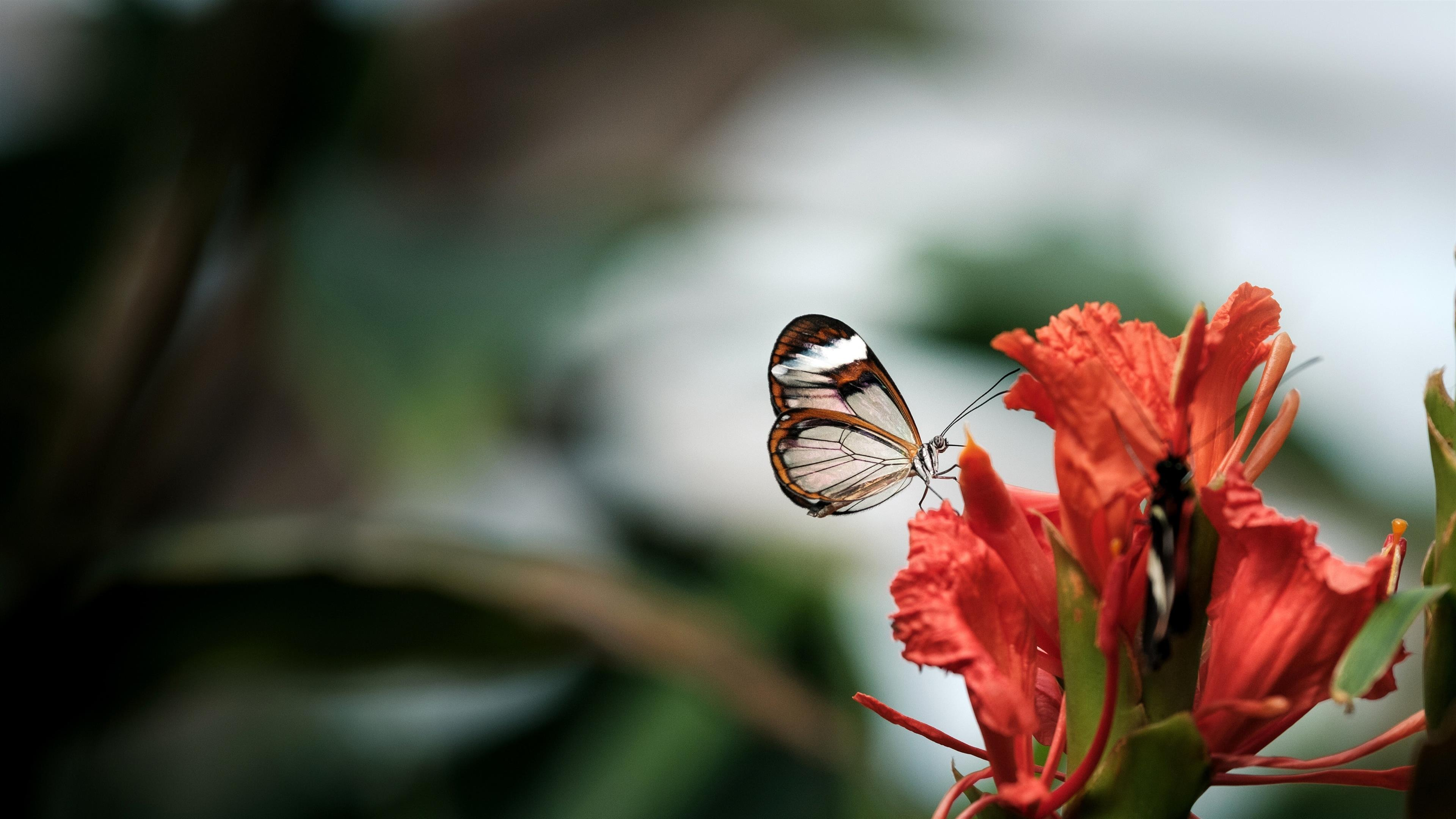 3840x2160 Cute Child Butterfly on Red Flower 5K Wallpaper