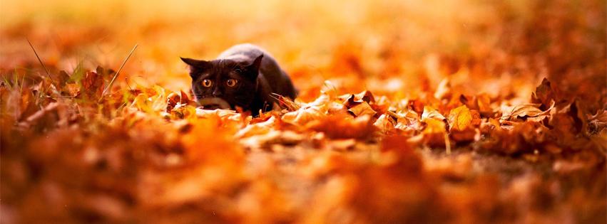 Facebook Cover Photo of Animal Black Cat