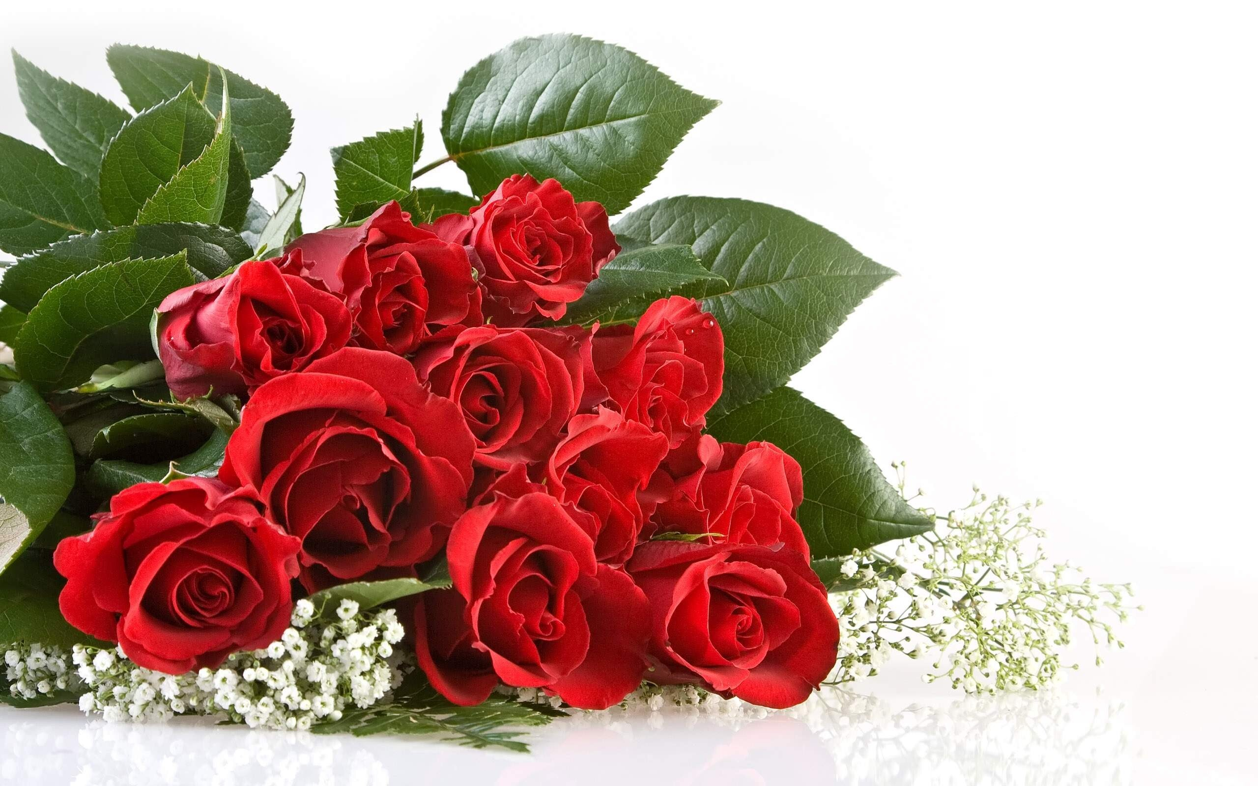Amazing Unique Wallpaper Of Red Rose Flowers Hd Wallpapers