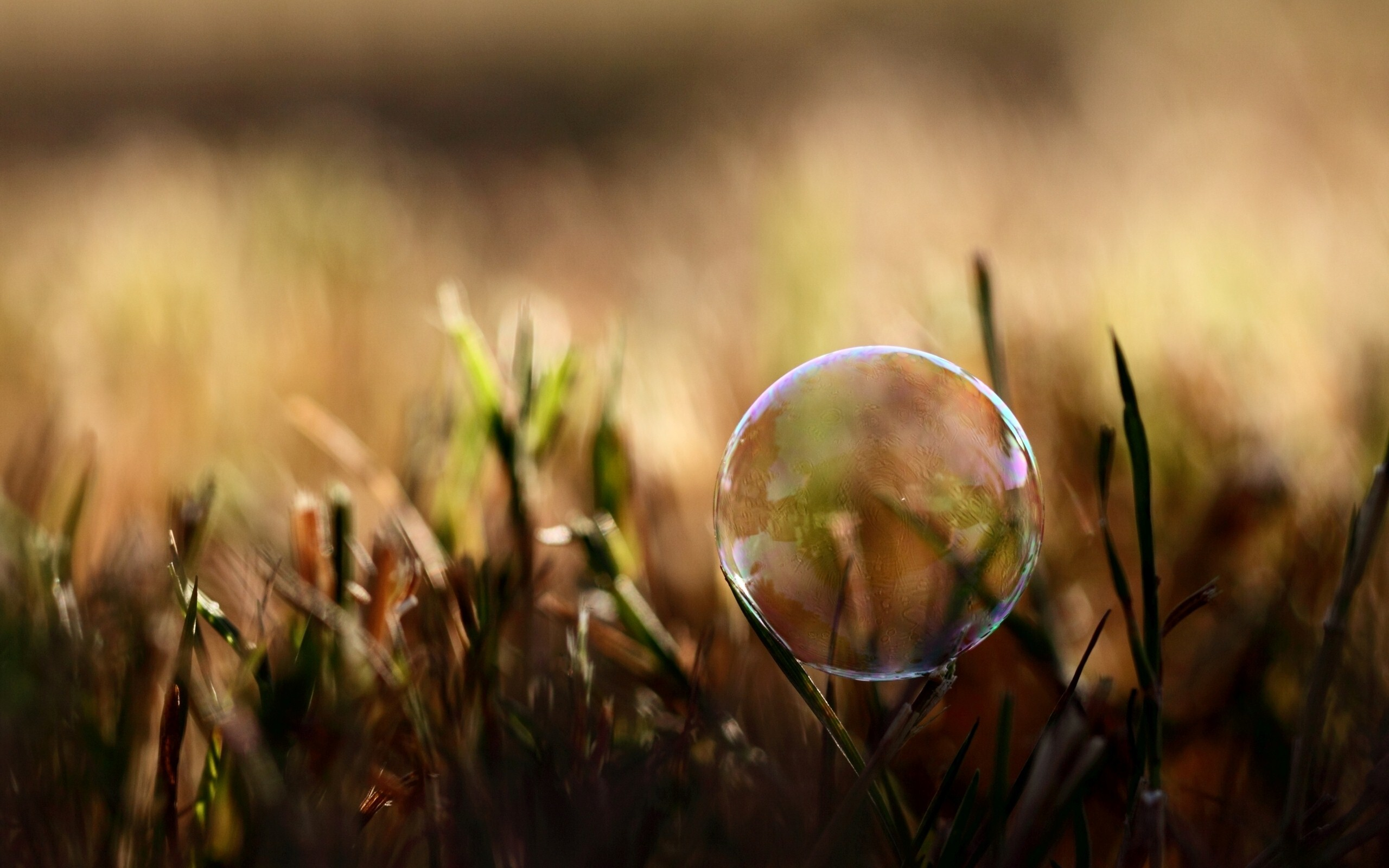 3d Bubbles Wallpaper: 3D Bubble In Grass Wallpaper