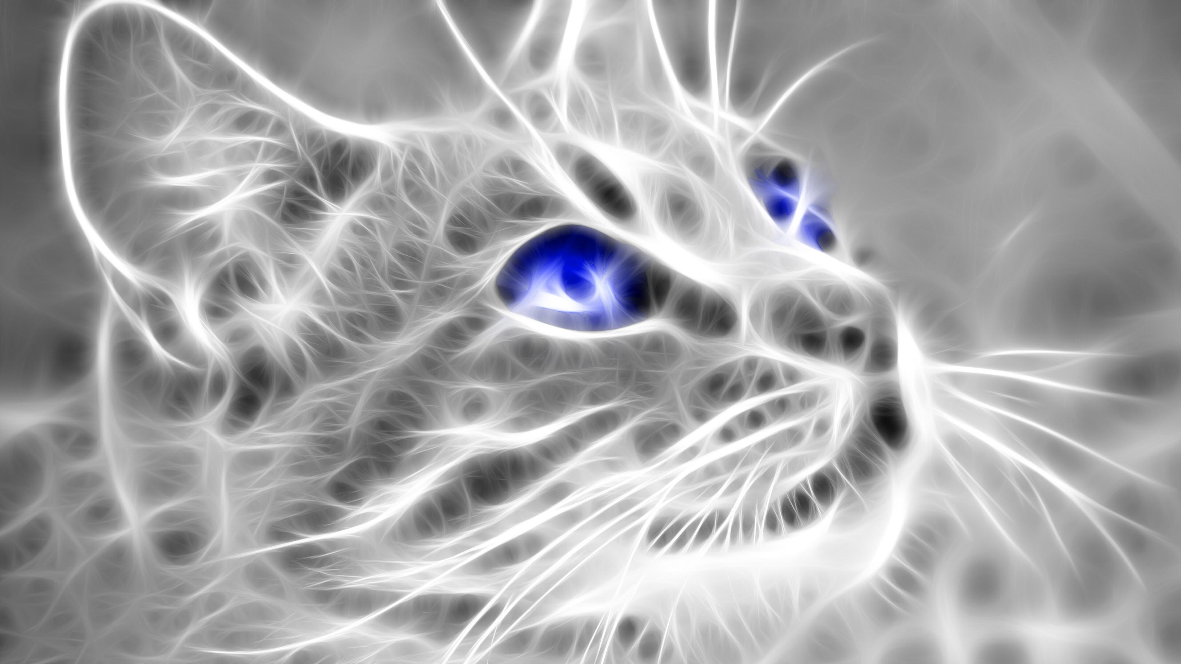 4K Wallpaper of 3D Cat   HD Wallpapers