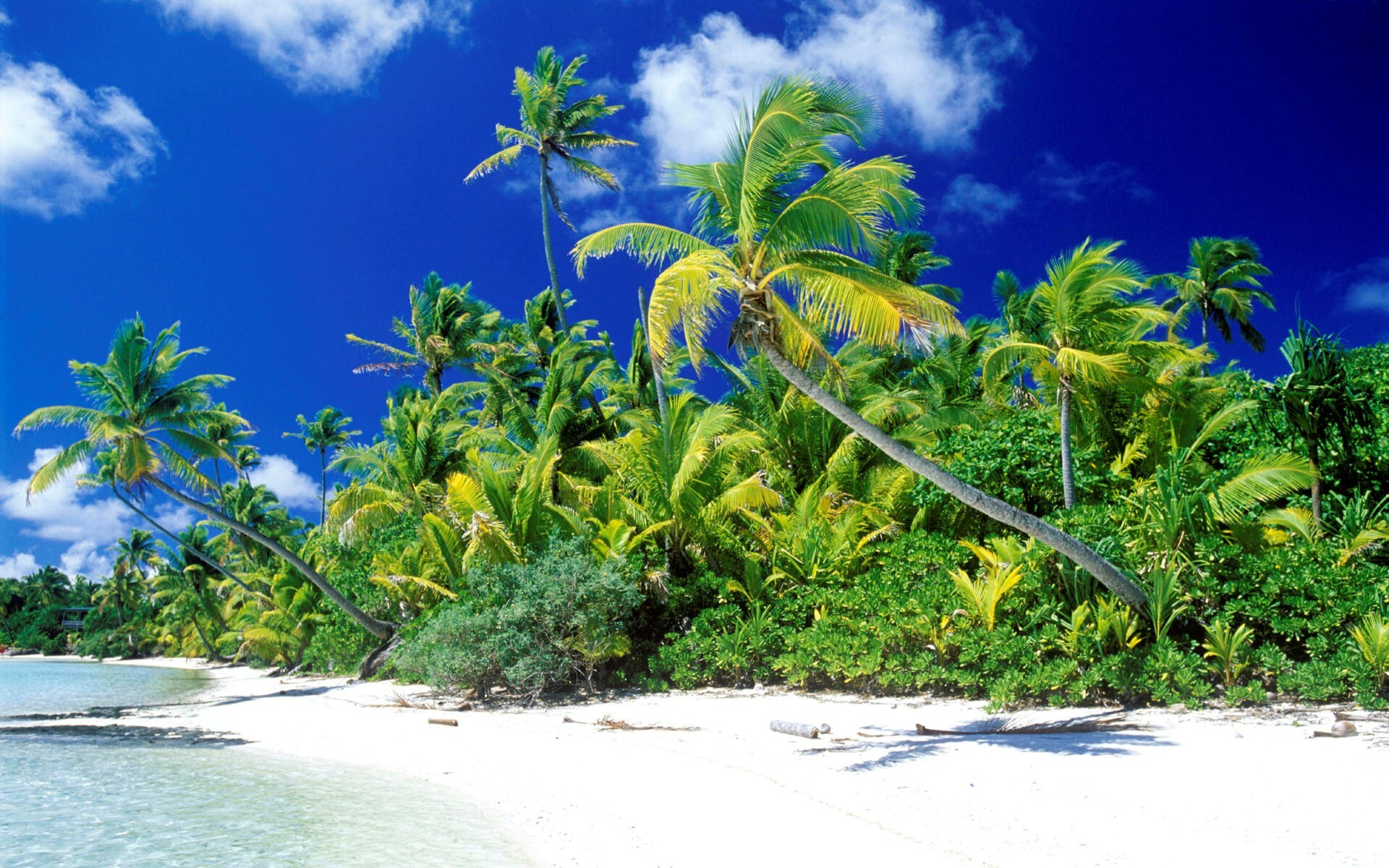 beautiful beach trees hd wallpaper | hd wallpapers