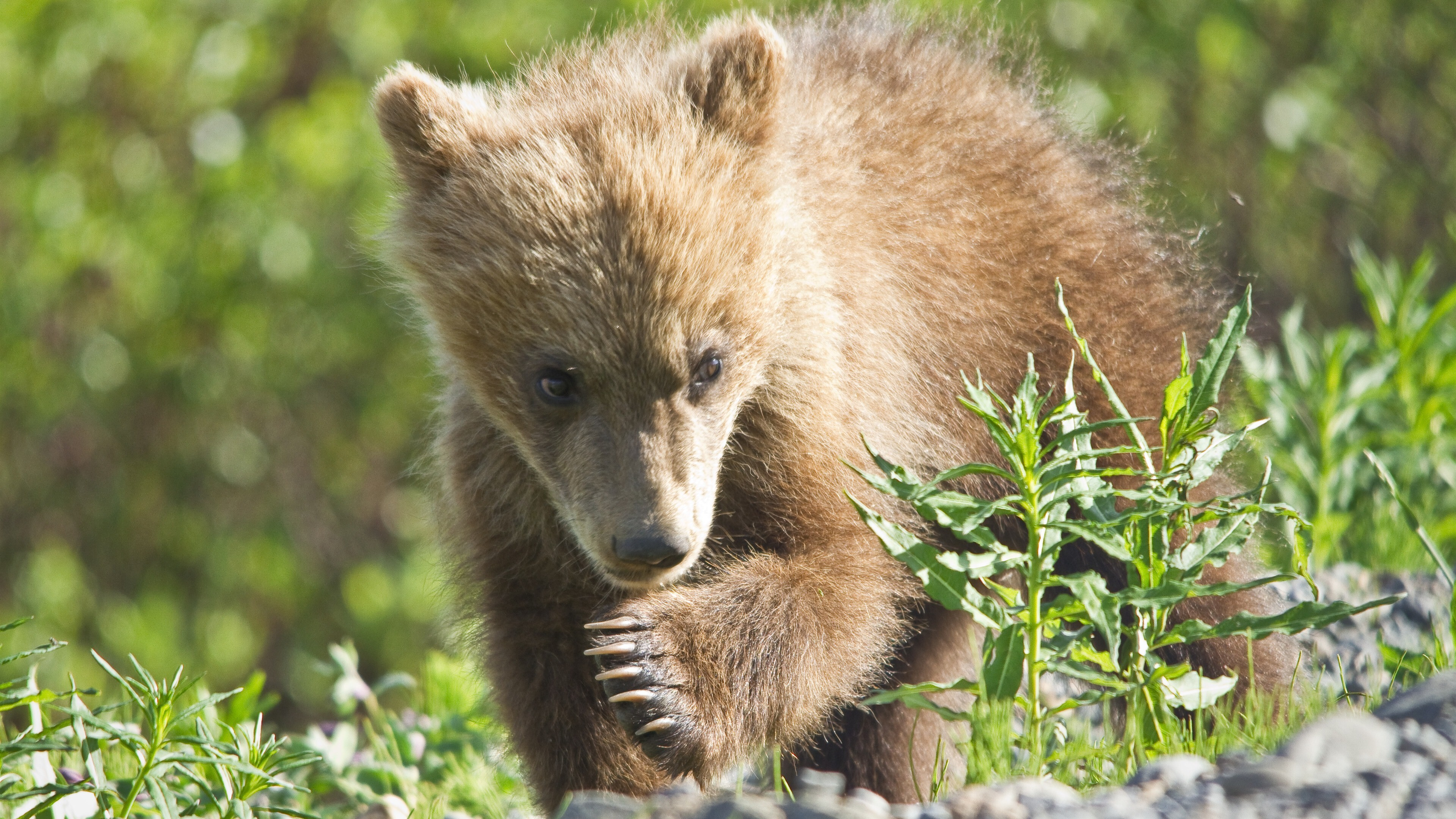 Brown Bear Between Rock Stones HD Animals Wallpapers   HD
