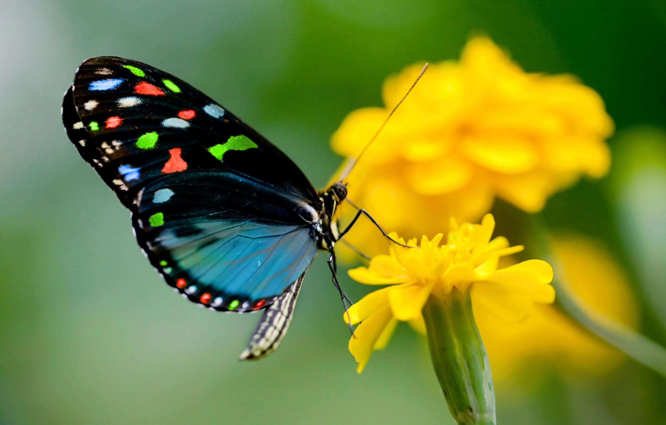 Beautiful Butterfly Wallpaper | HD Wallpapers