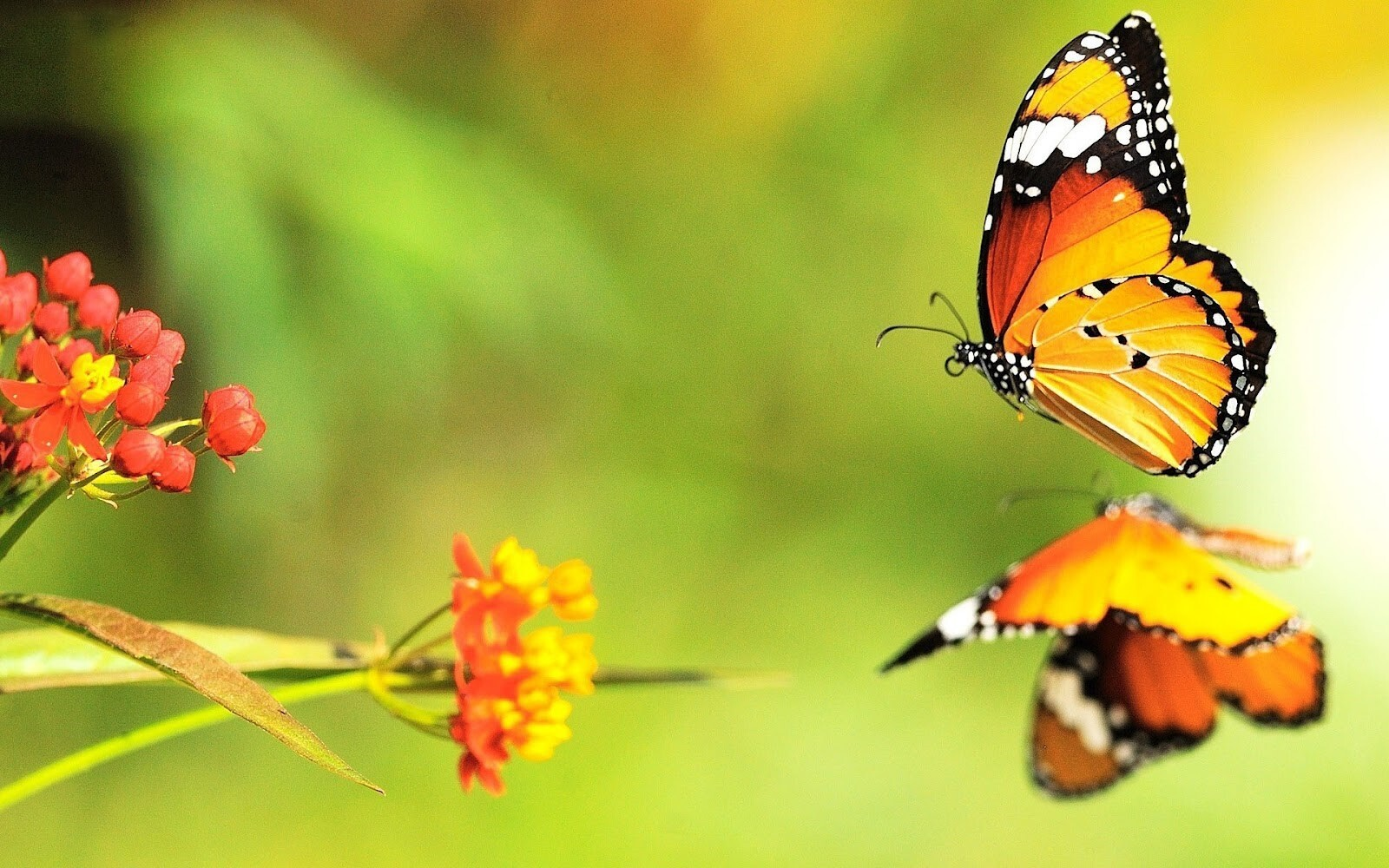 Butterflies Wallpapers Hd Download: Beautiful Butterfly On Water Reflection HD Wallpaper