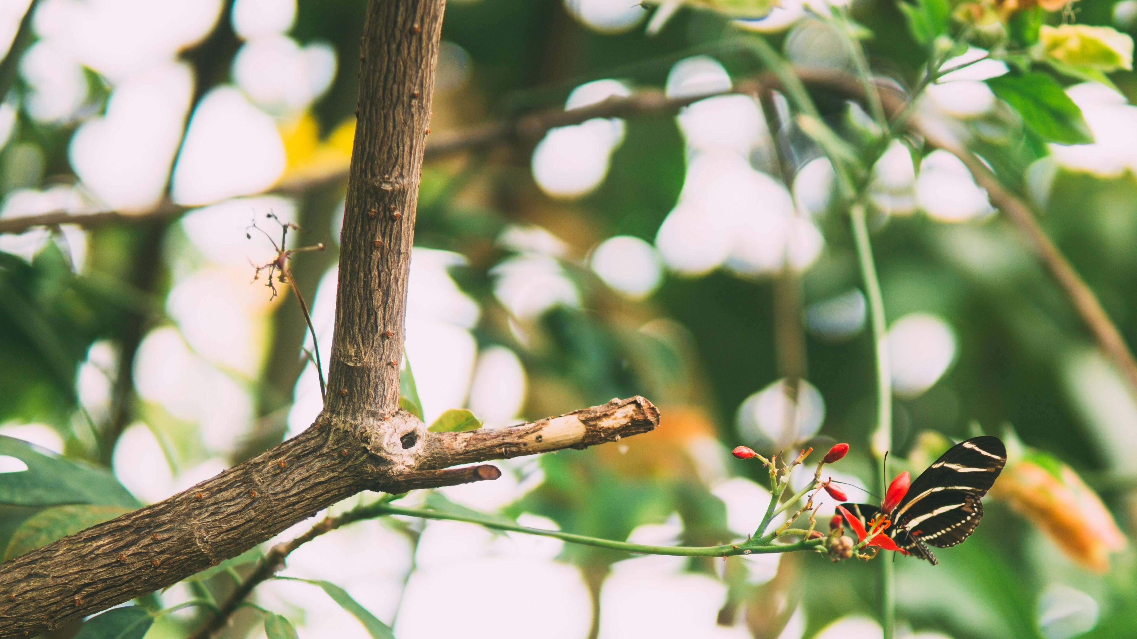 Butterfly on Tree Branch 4K Wallpaper | HD Wallpapers