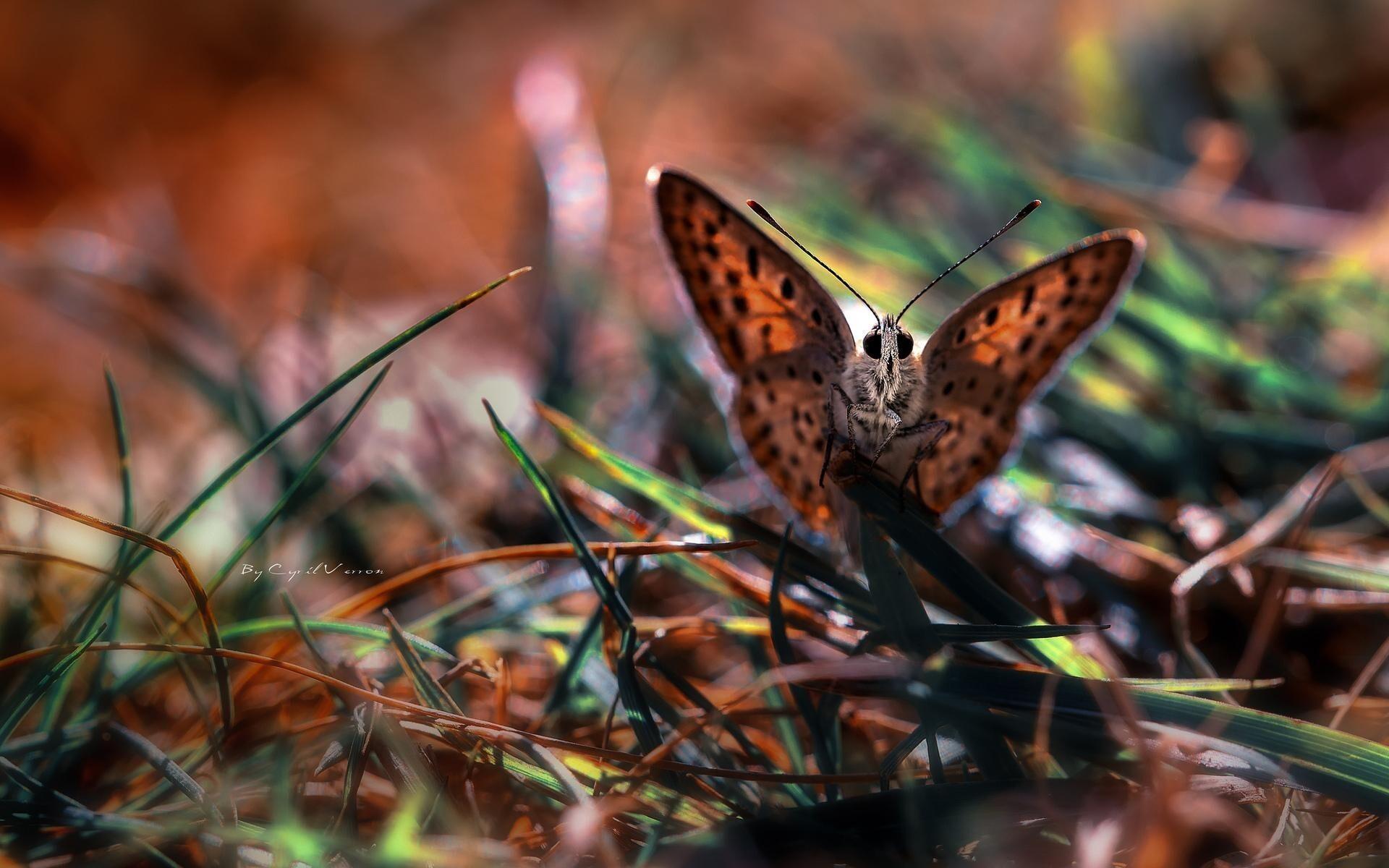 Cute Butterfly on Grass Wallpaper | HD Wallpapers