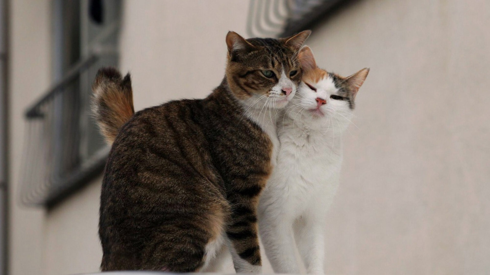 2 Cat Love Together | HD Wallpapers