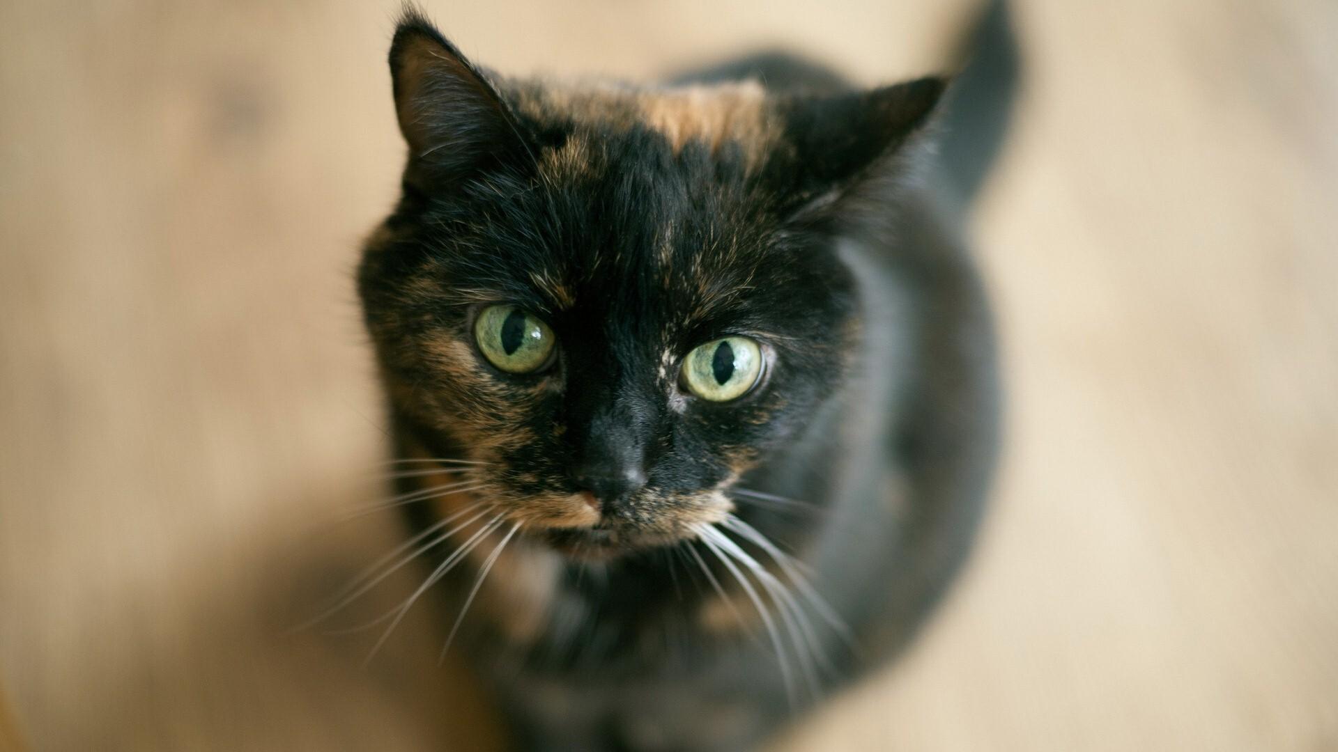Black Cat Image Download
