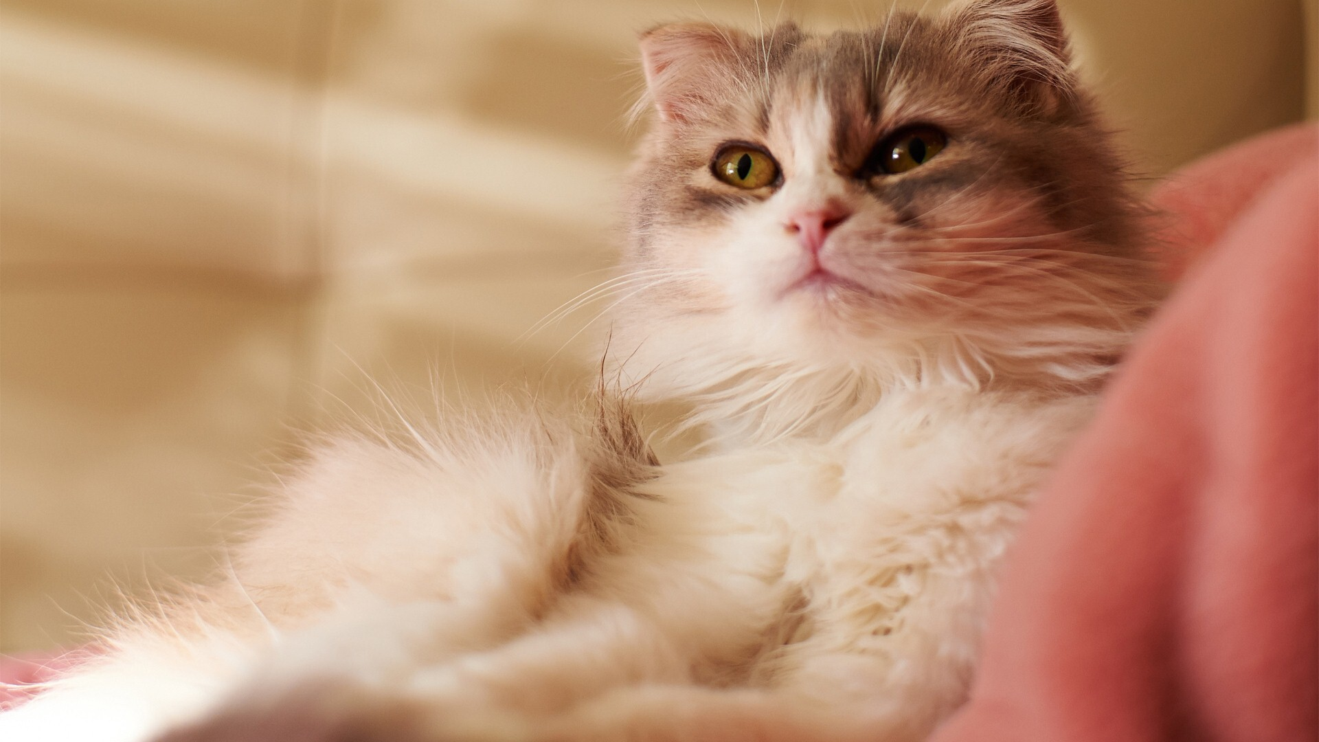 Free Download Images of Cat | HD Wallpapers
