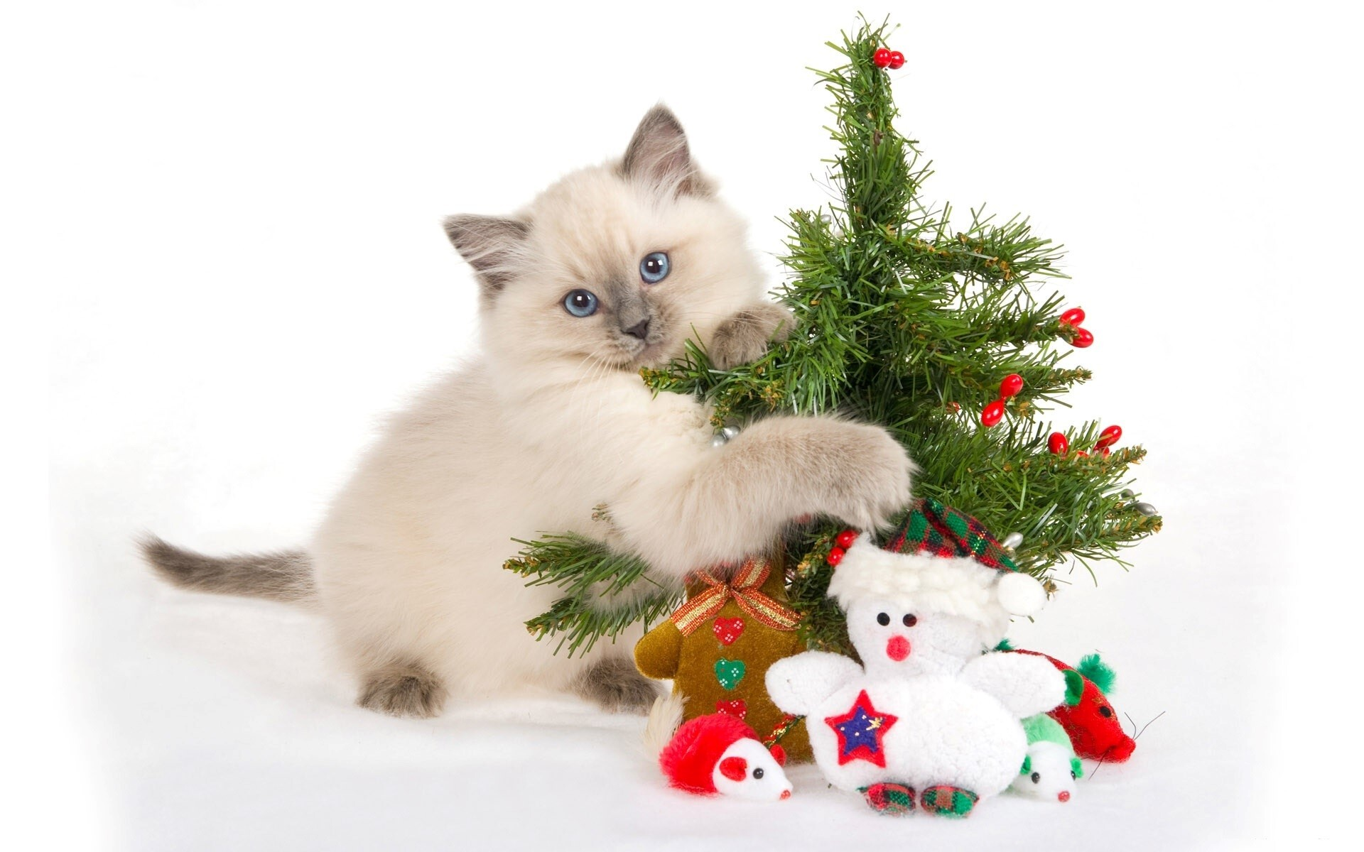Nice cute cat with christmas tree wallpaper hd wallpapers for Gatti sfondi desktop gratis