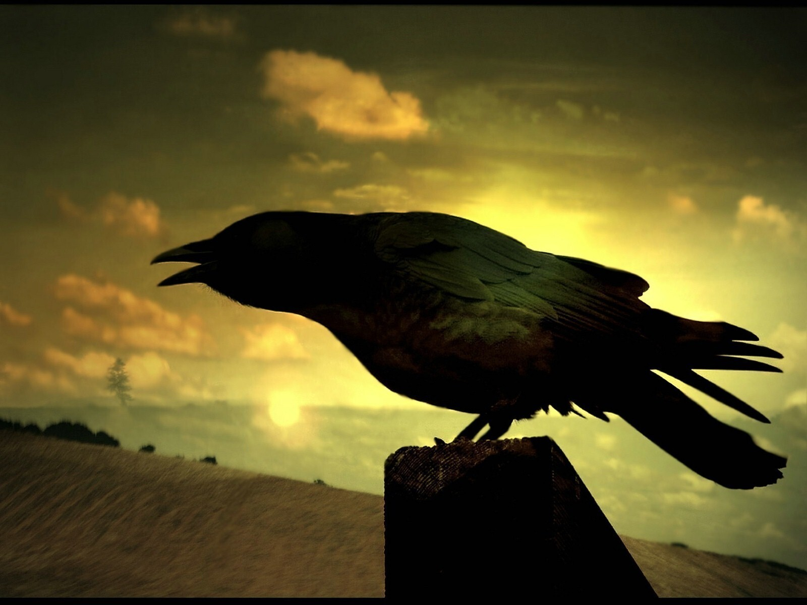 black crow at night hd wallpapers