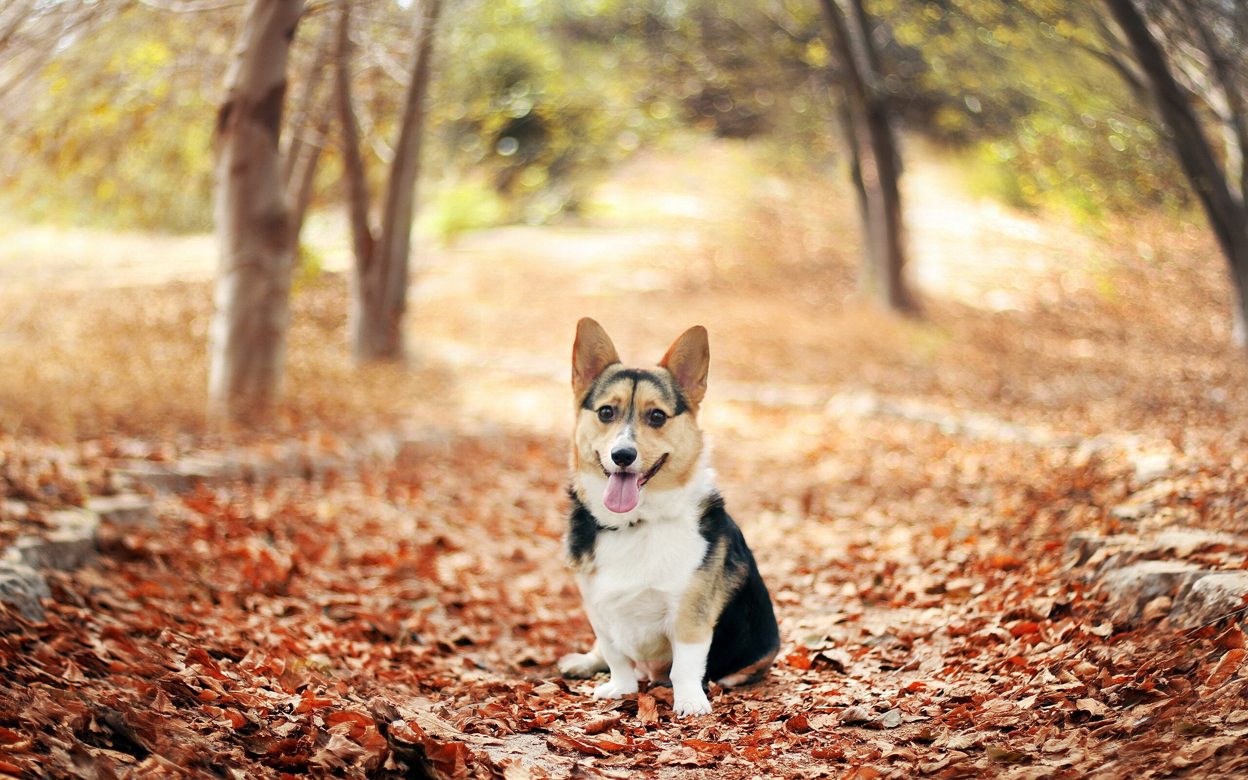 Cute Dog Animal In Garden Hd Wallpapers Hd Wallpapers