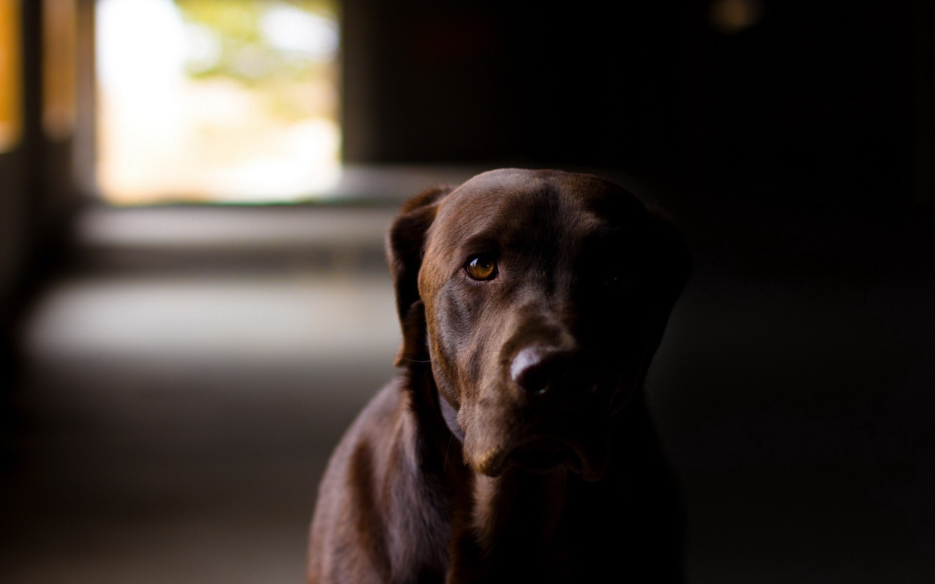 Black Dog in Home HD Pics | HD Wallpapers