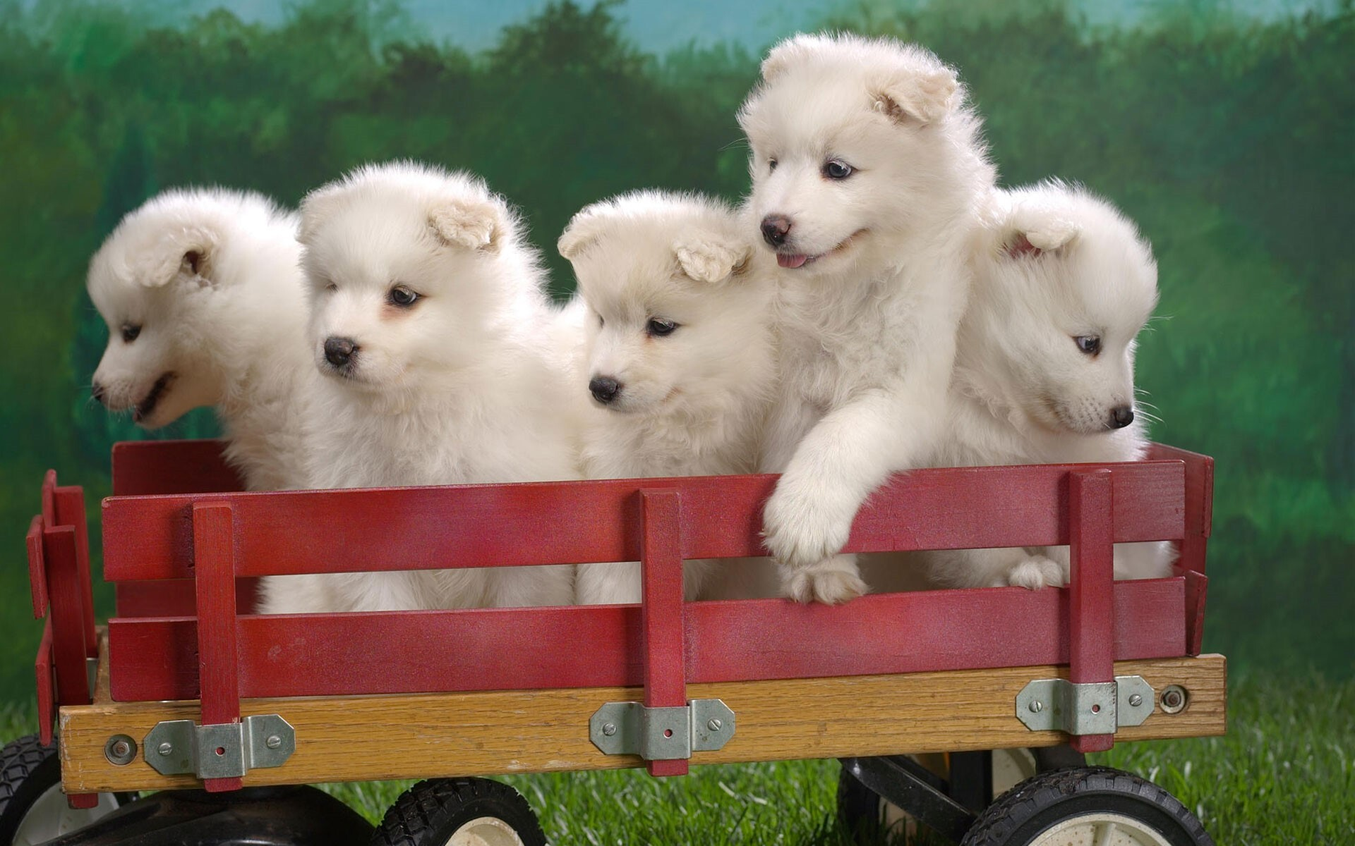 cute five puppies on toy trolly pets animal wallpapers | hd wallpapers
