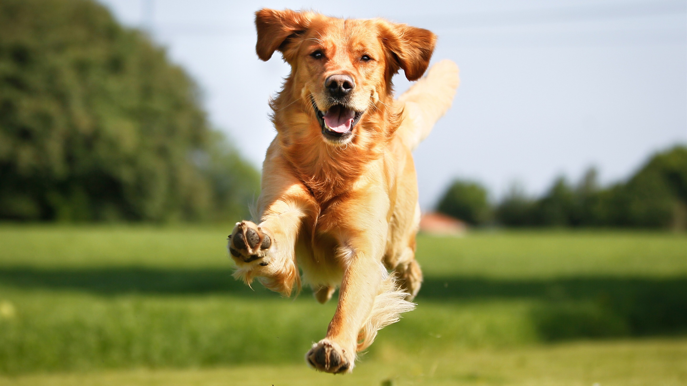 Dog Running On Grass Image Hd Wallpapers