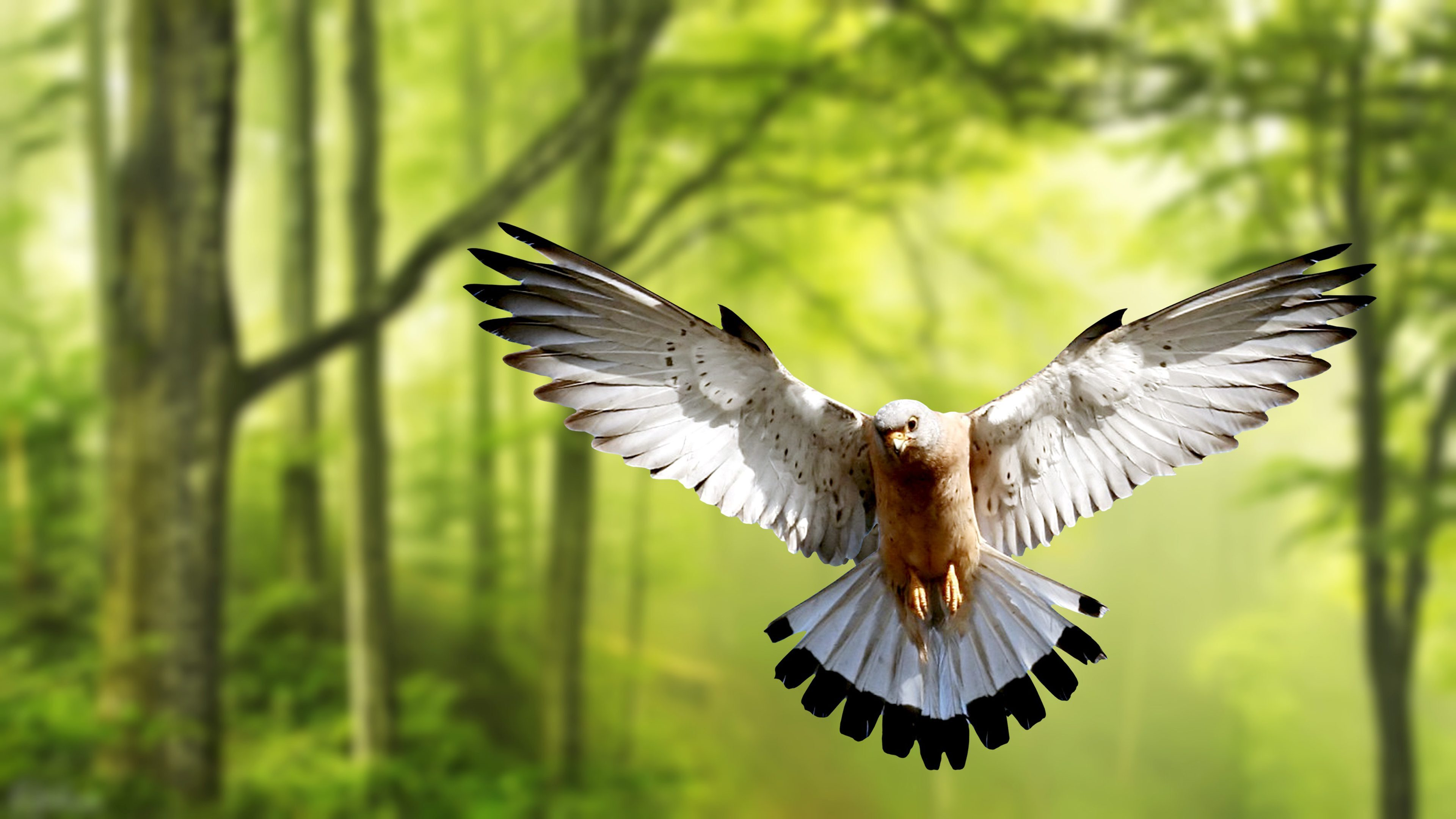 Flying Bird Pigeons 4k Hd Wallpapers