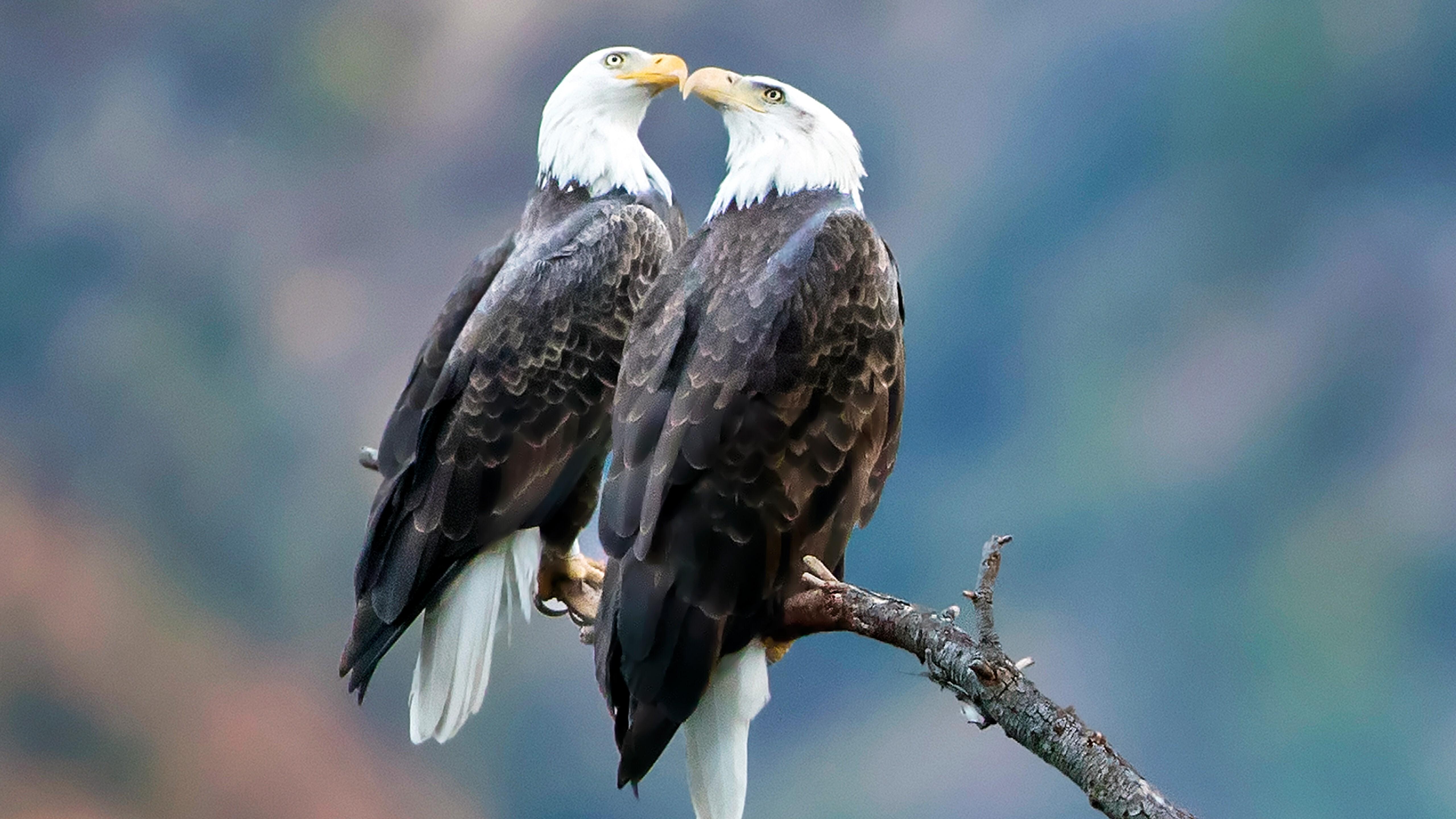Bird Eagle 5K Wallpaper   HD Wallpapers