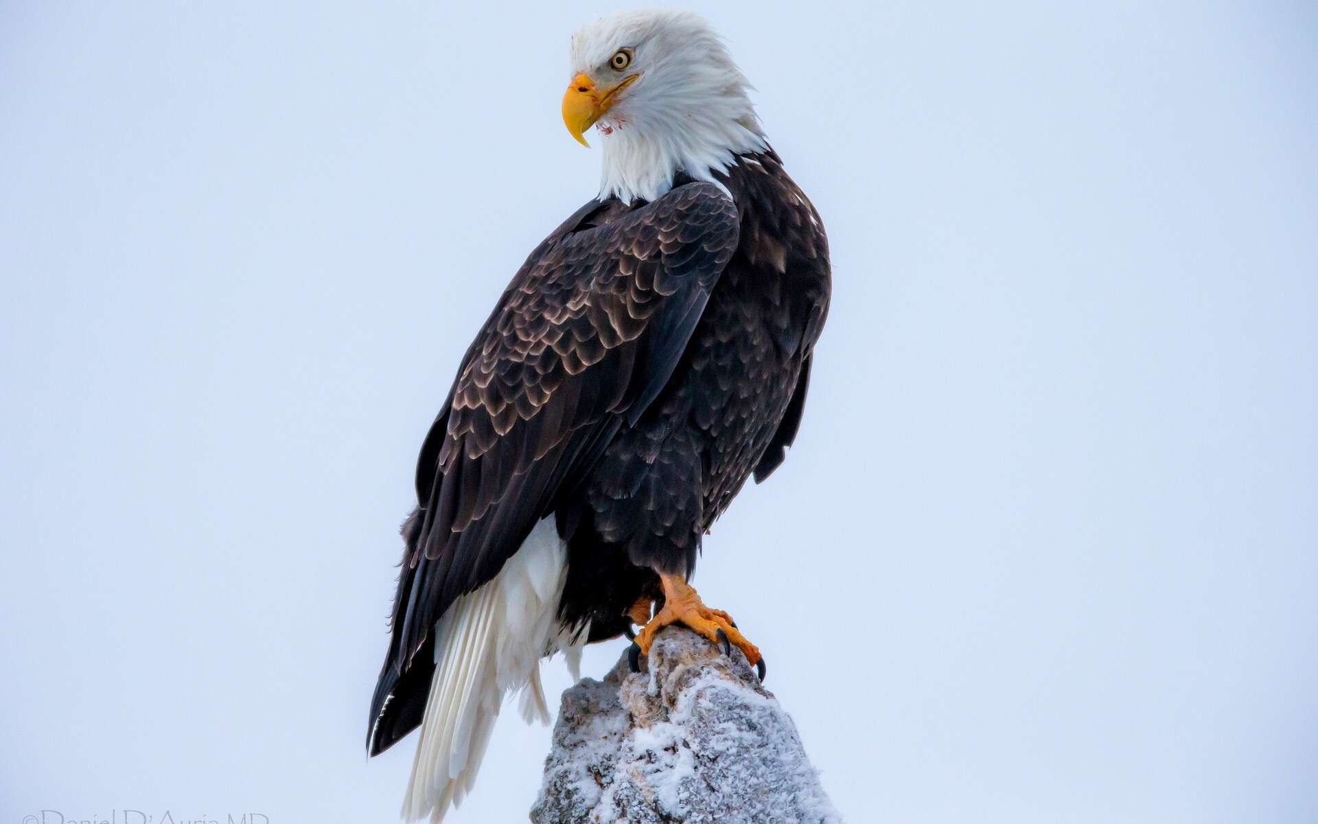 eagle 1280x1024 wallpaper - photo #9