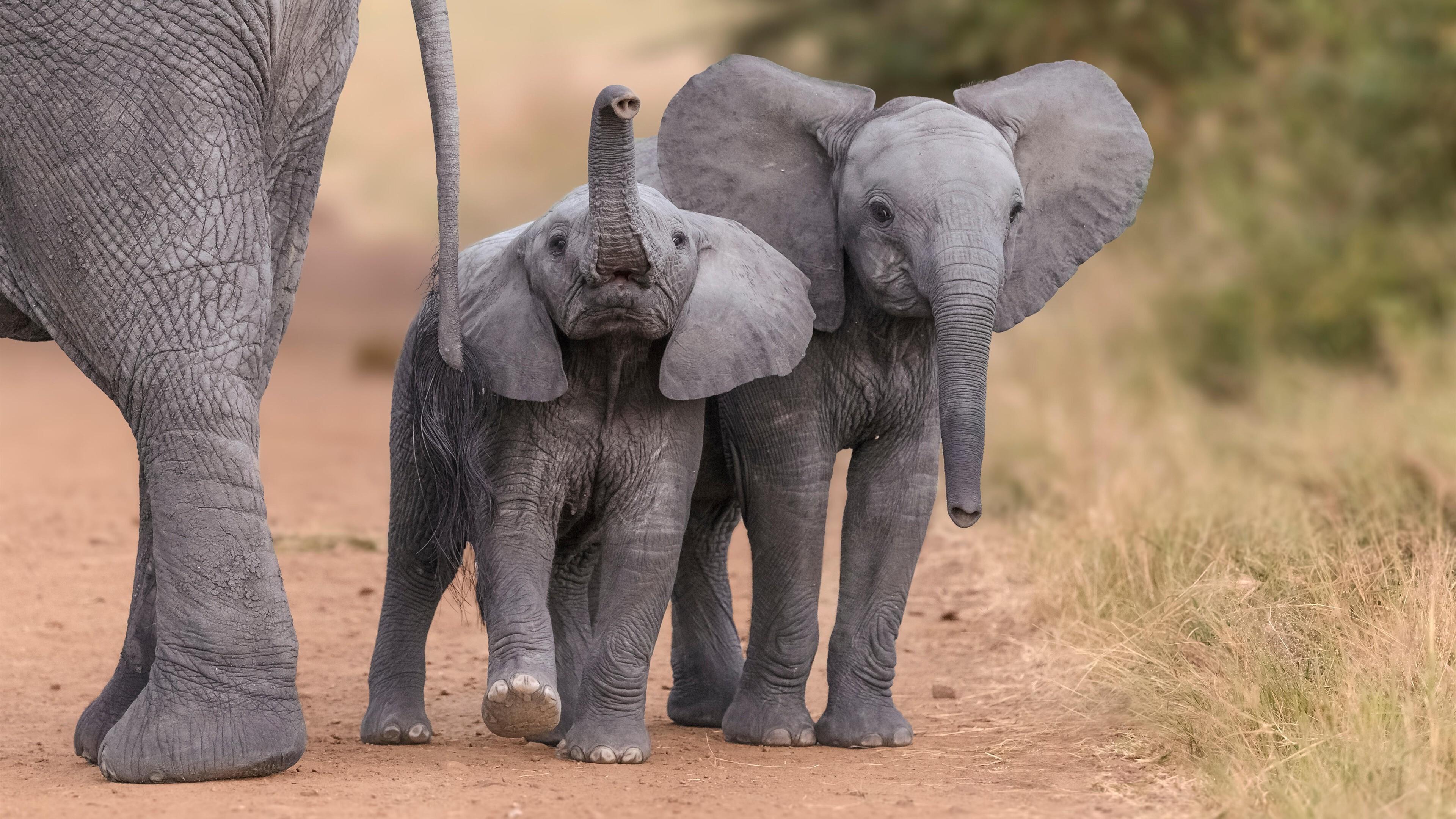 2 Lovely Elephant Child 4K Wallpaper | HD Wallpapers