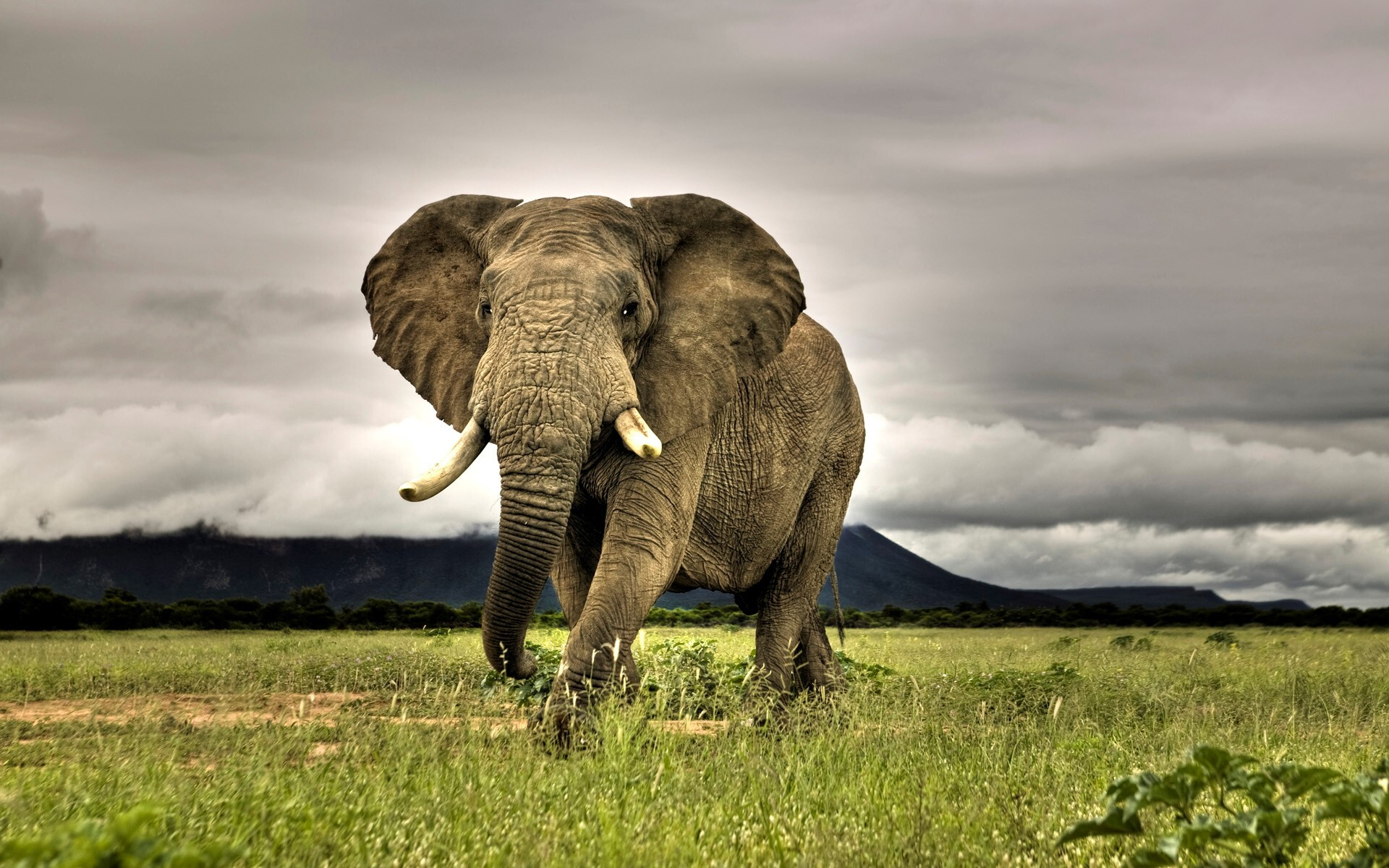 Wallpaper download elephant - Elephant Wallpapers