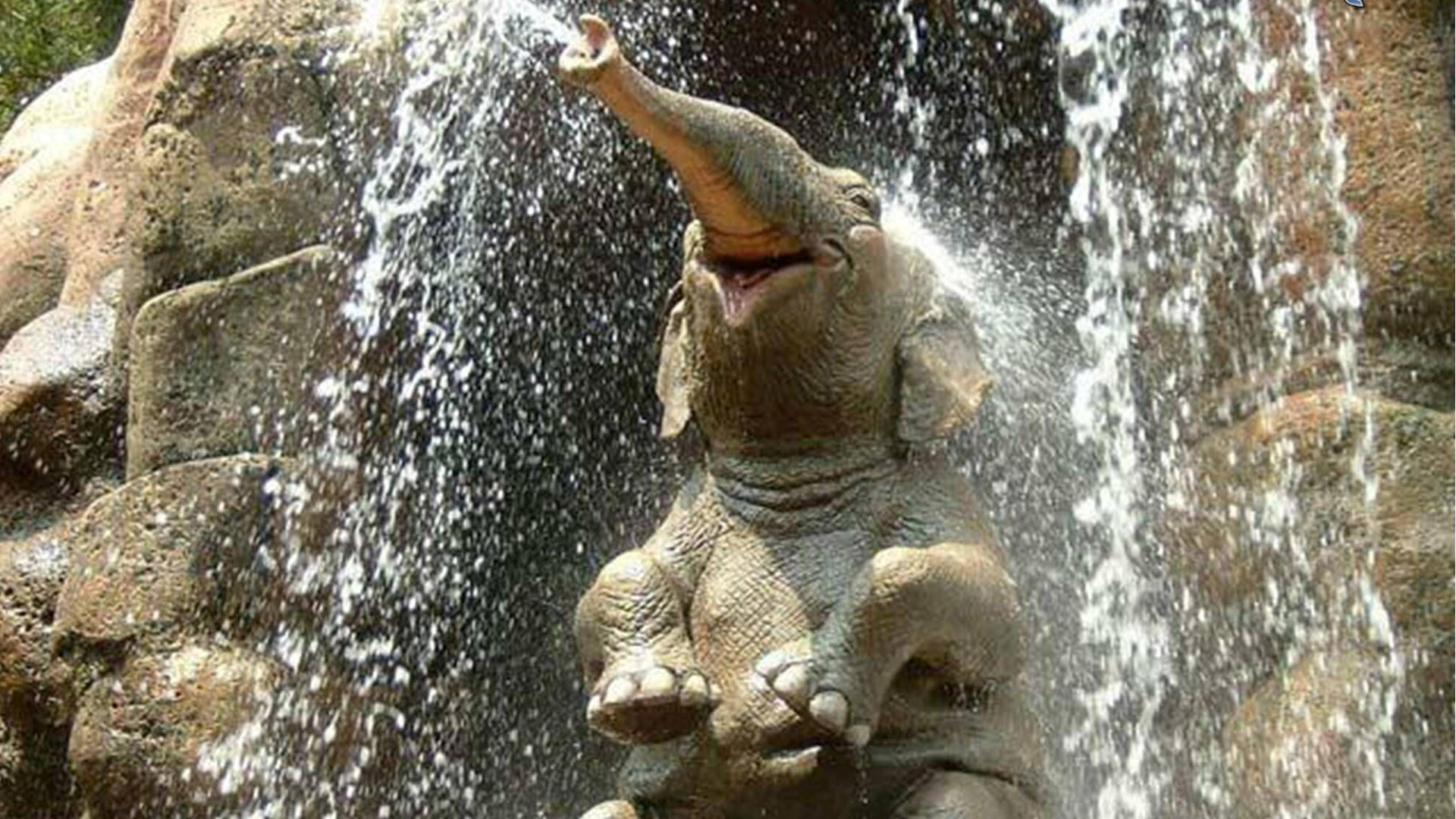 Elephant Bath in Waterfall Funny Photo | HD Wallpapers