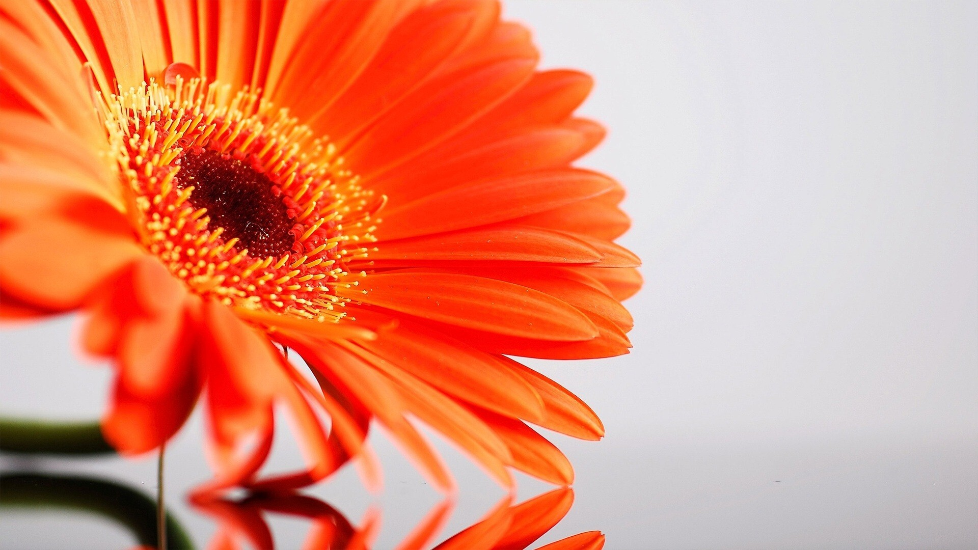 Amazing Sunflower HD Desktop Background Wallpapers For Laptop