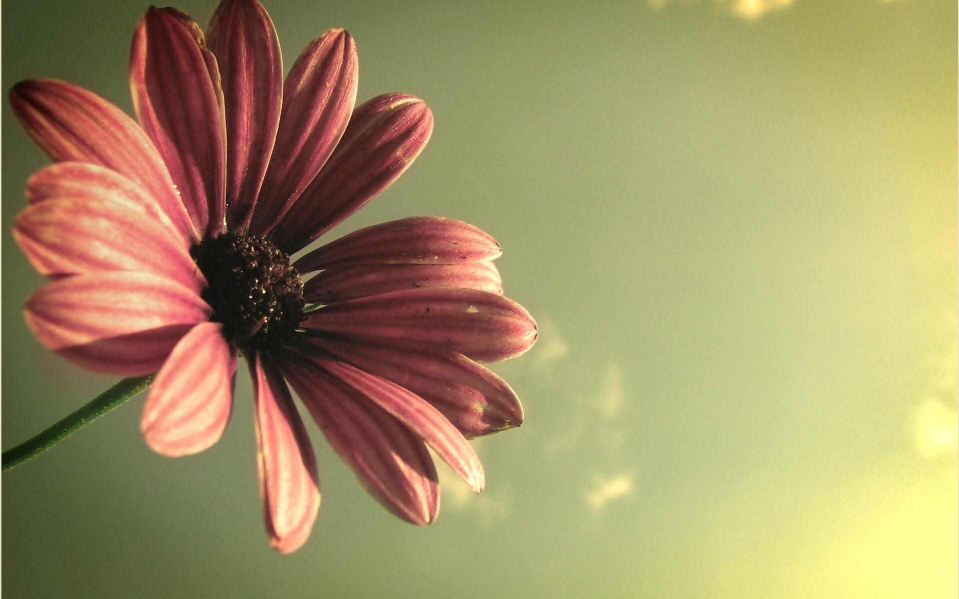 Beautiful Flower HD Image