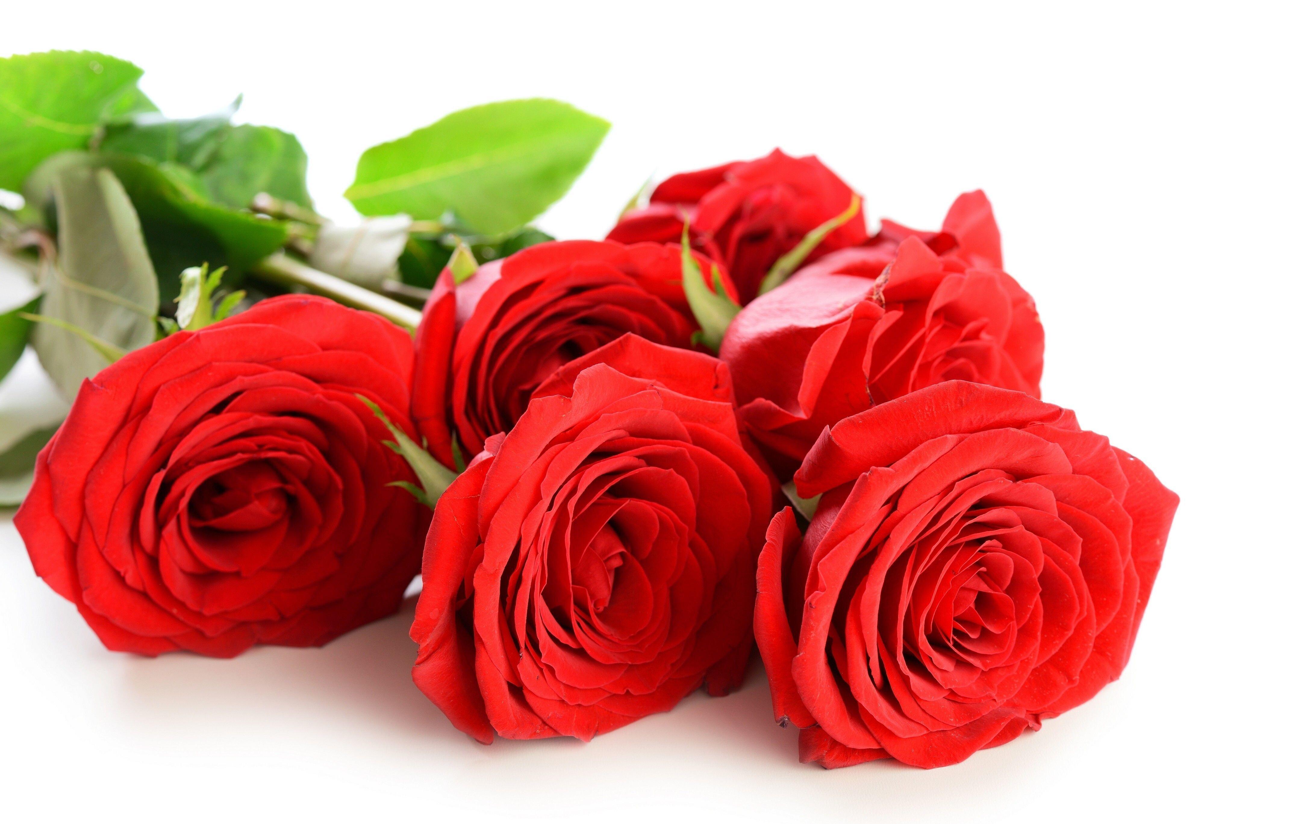 Beautiful Rose Flower 4k Wallpaper Hd Wallpapers