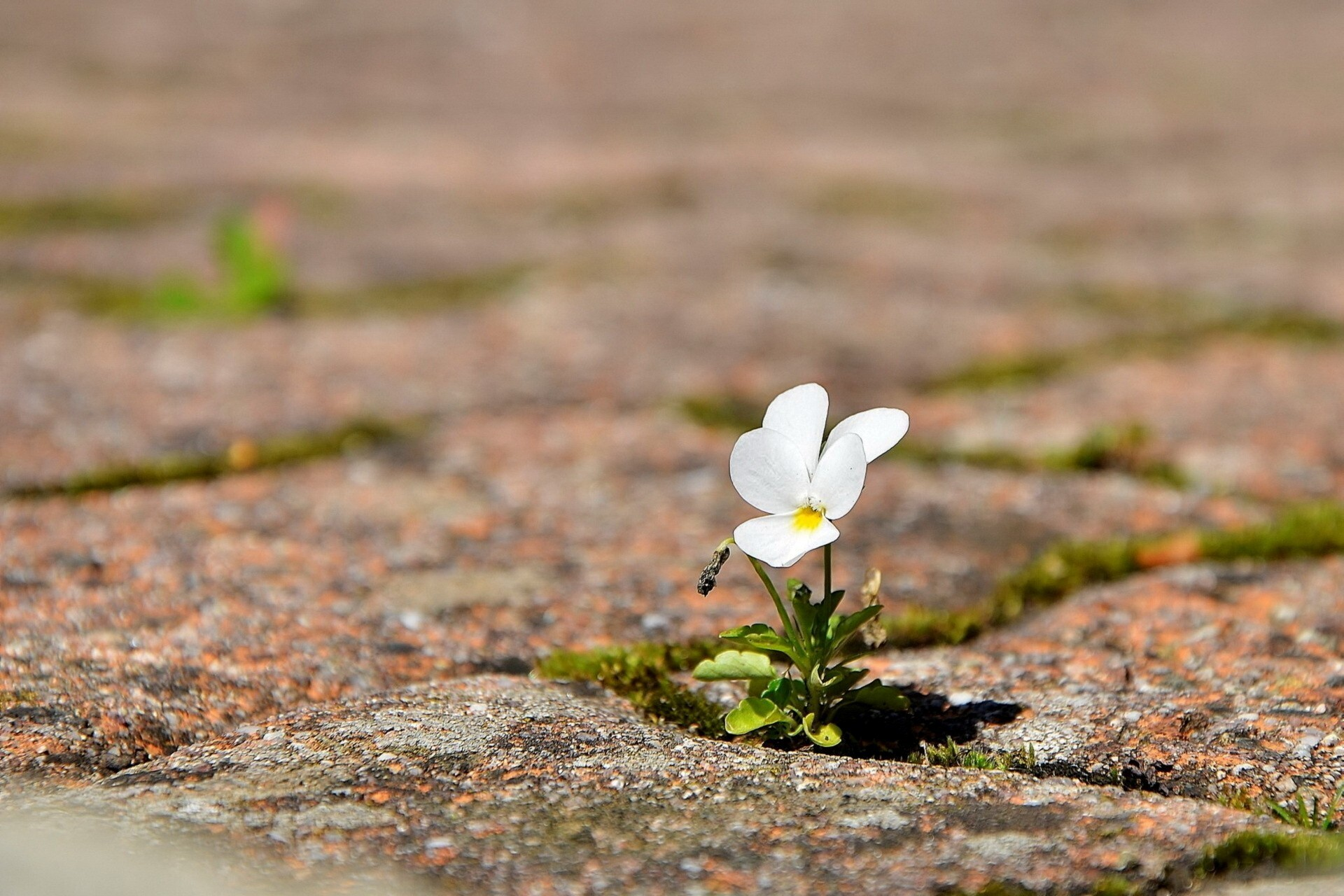 beautiful small flower hd wallpaper | hd wallpapers