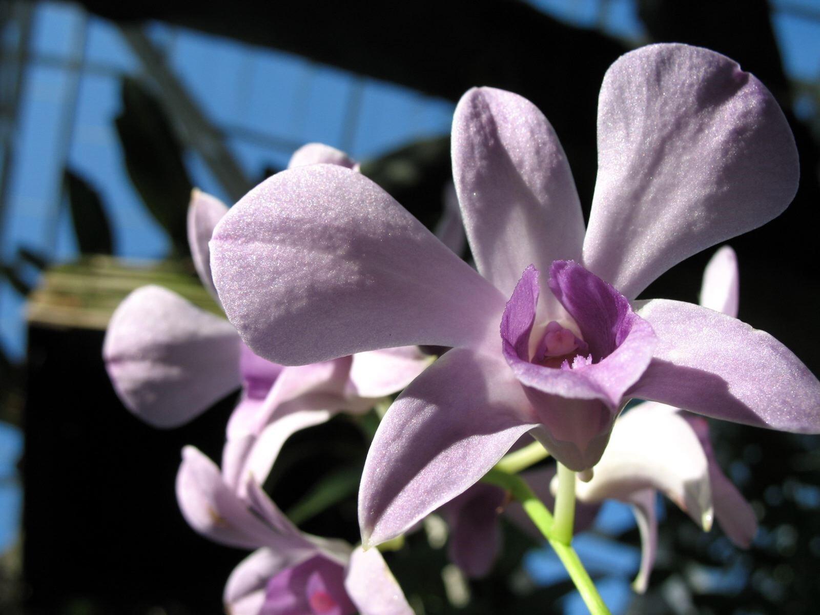 Hd Purple Flowers Photo Free Download Hd Wallpapers