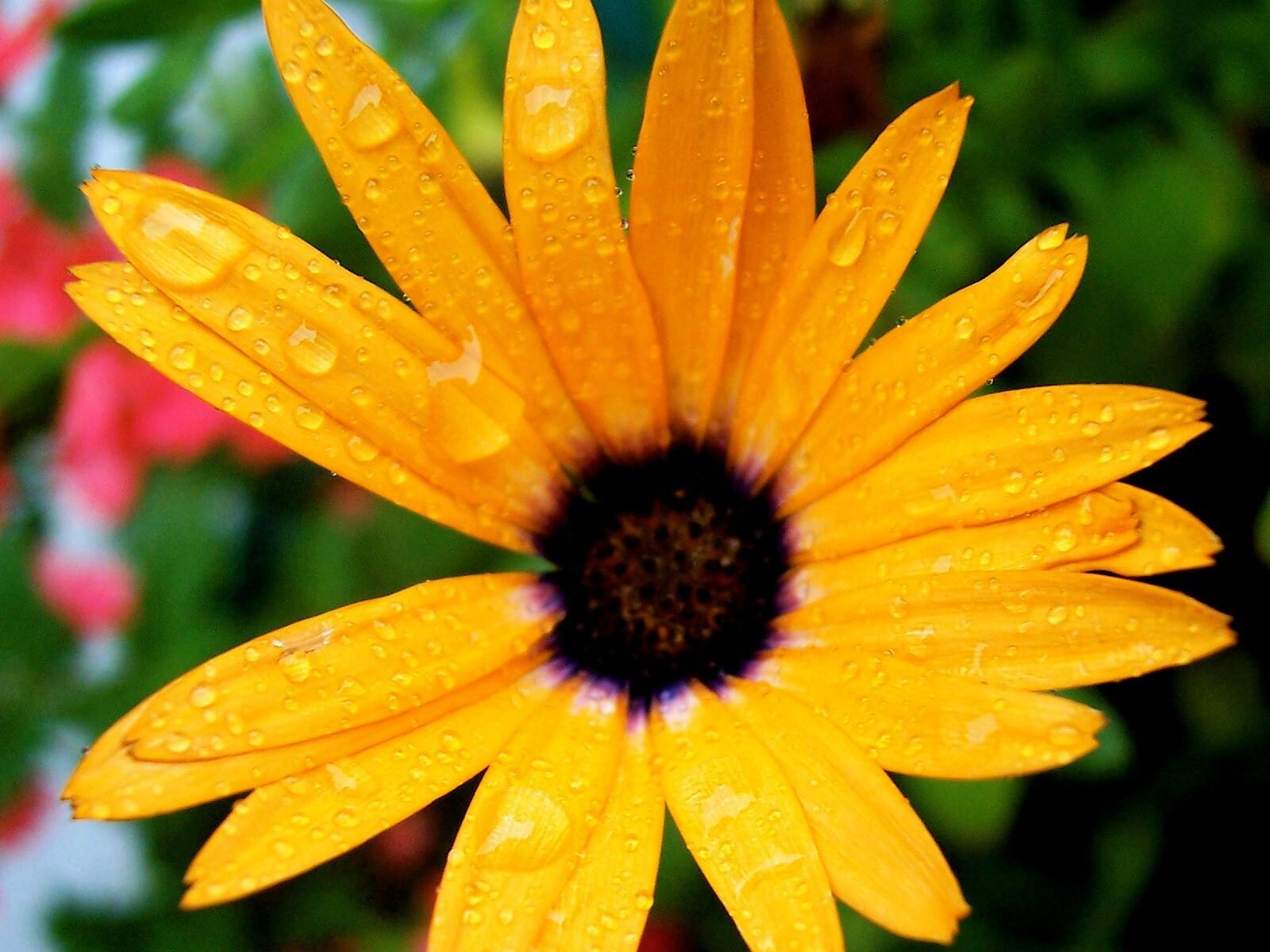 Nice big yellow flower free photos hd wallpapers mightylinksfo