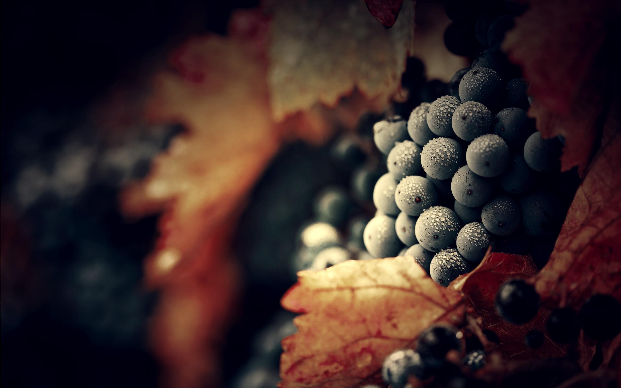 Nice Fog Drops on Black Grapes Fruits HD Images   HD ...