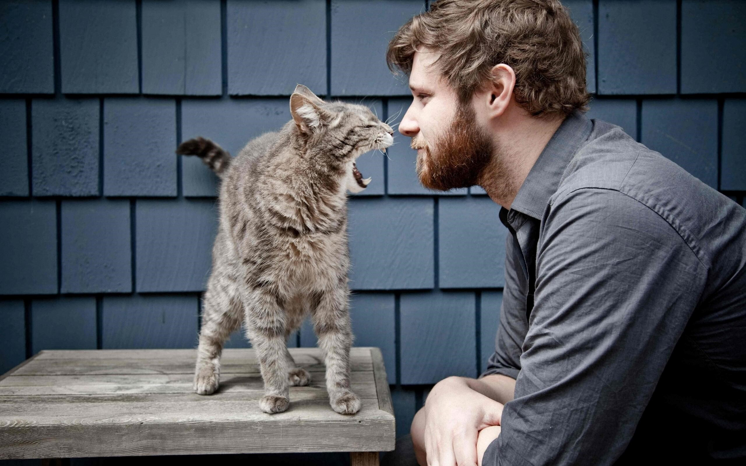 Funny Cat Vs Man Wallpaper Hd Wallpapers