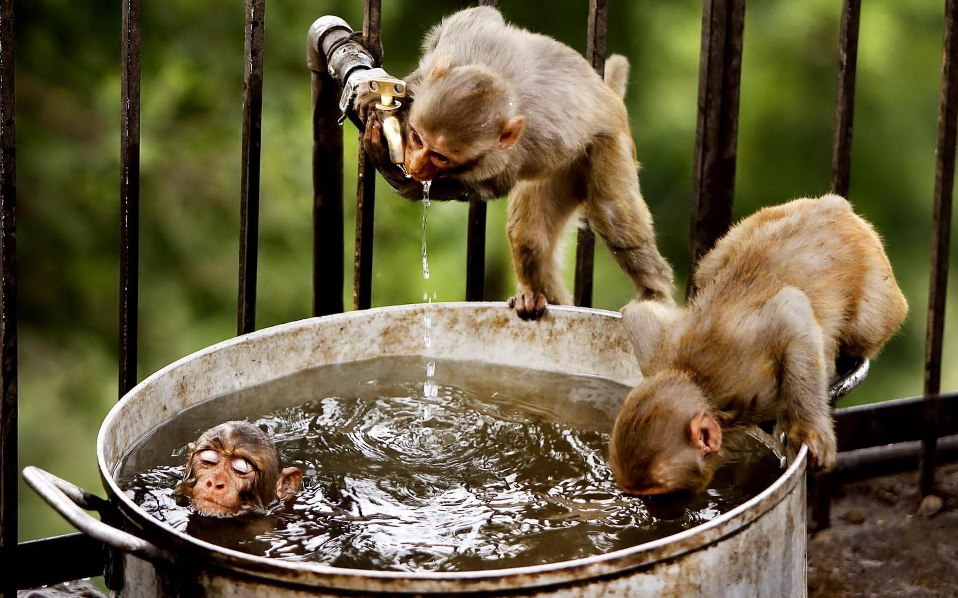 Funny Monkeys In A Bucket Silly Wallpaper Hd Wallpapers