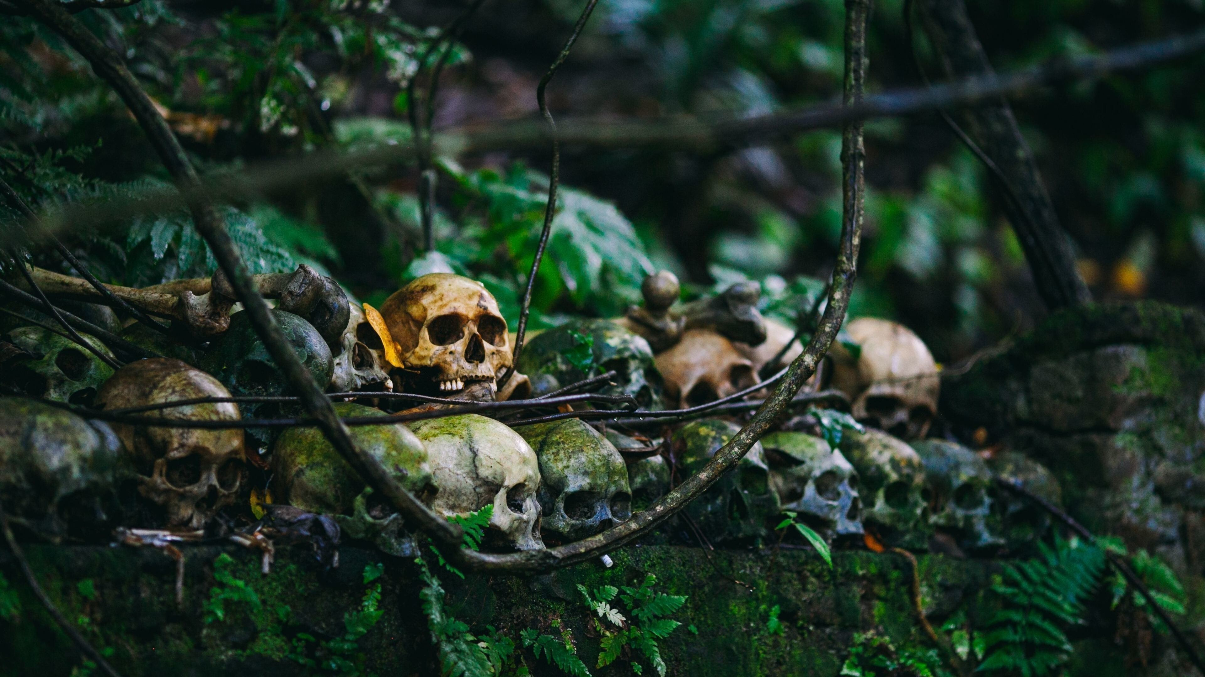 Horror Skull In Jungle 4k Wallpaper Hd Wallpapers