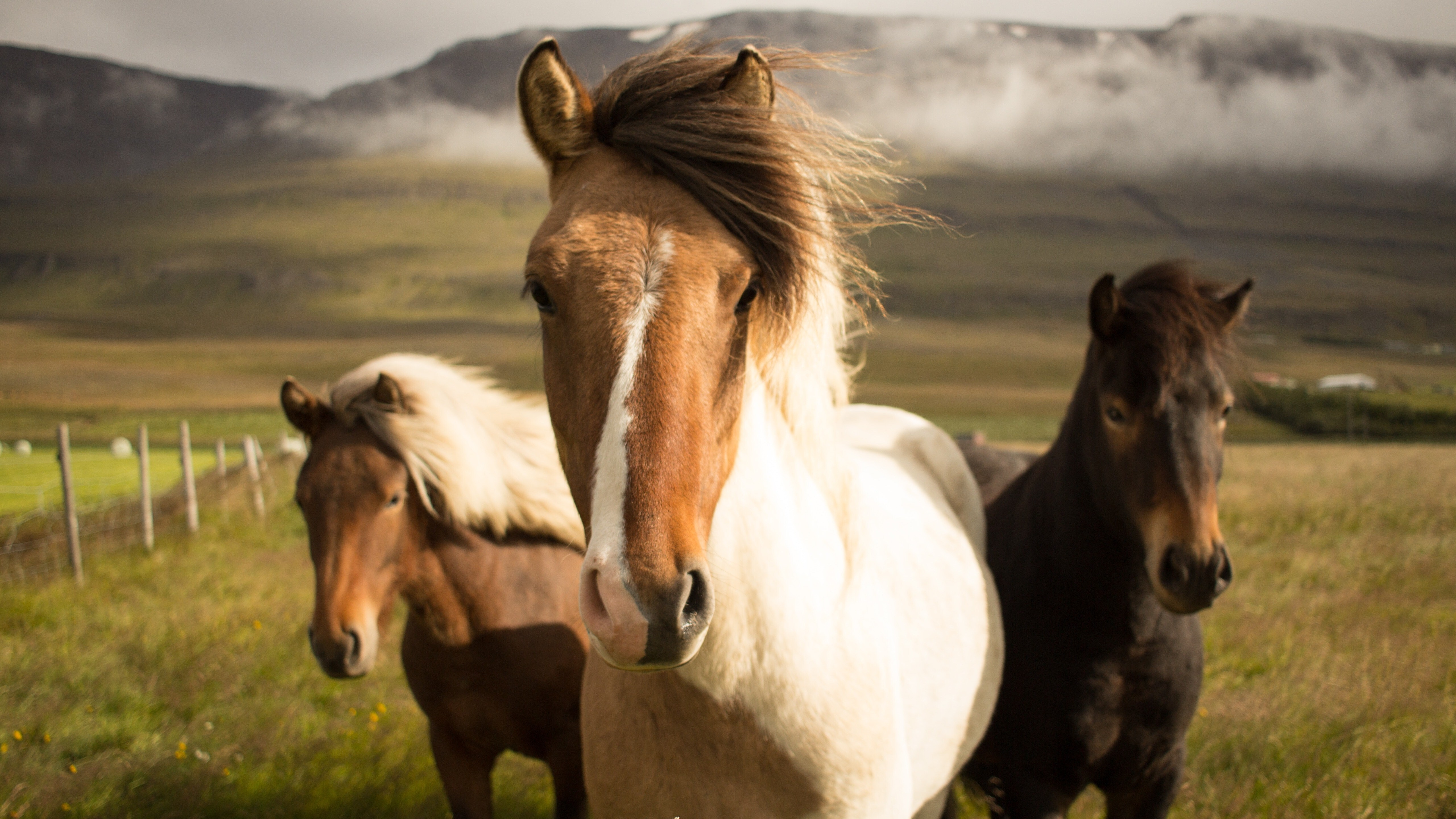 3 White Black And Brown Horses 5k Wallpaper Hd Wallpapers