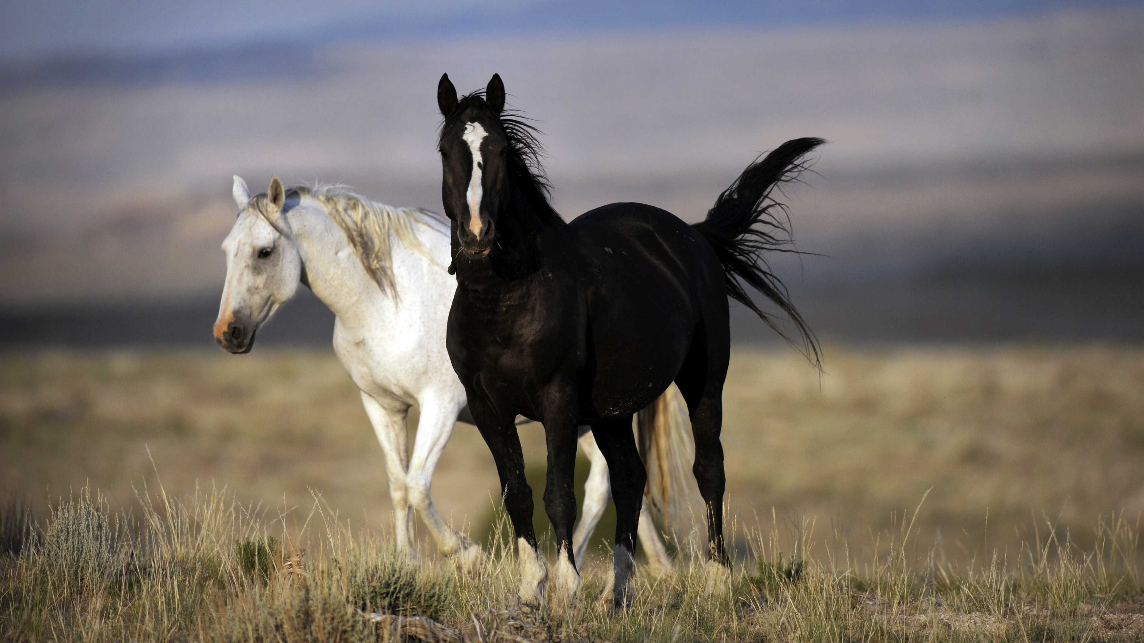 Black And White Horse 4k Photo Hd Wallpapers