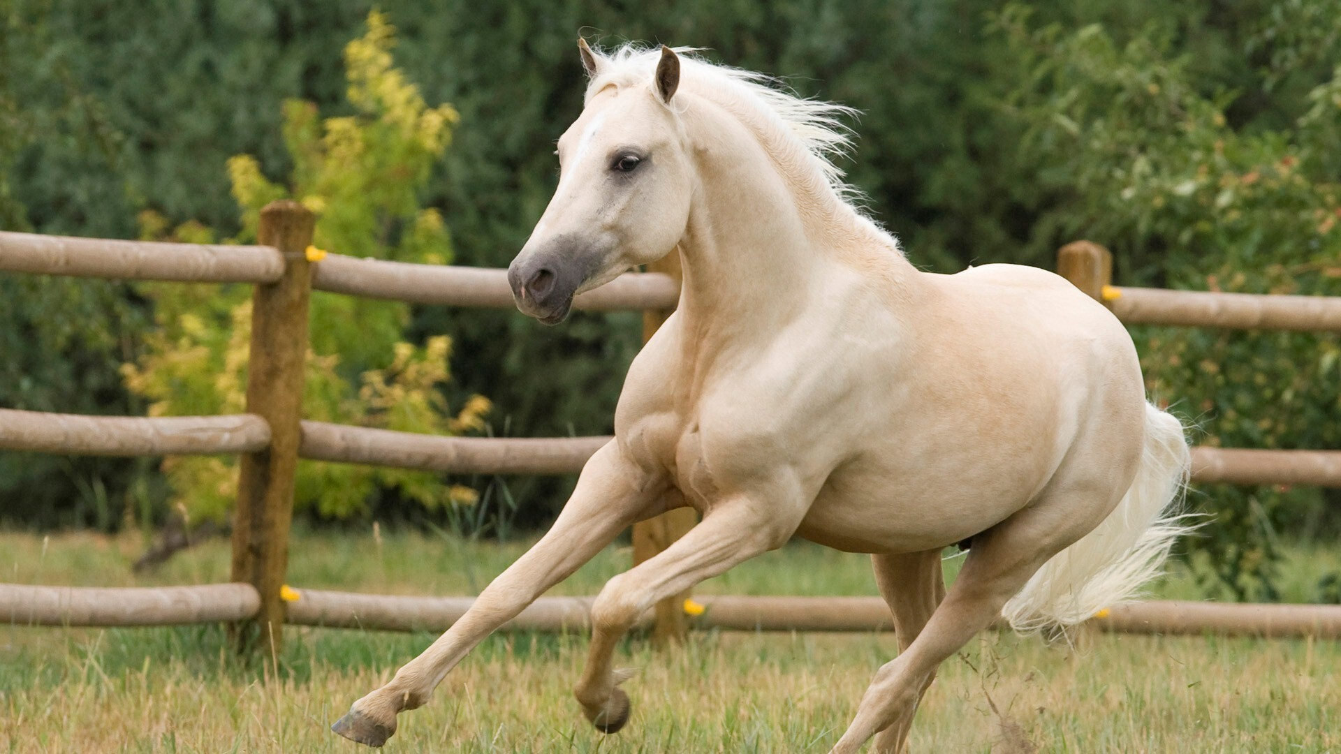 Lovely White Horse Running In Ground Hd Animal Pics Hd Wallpapers
