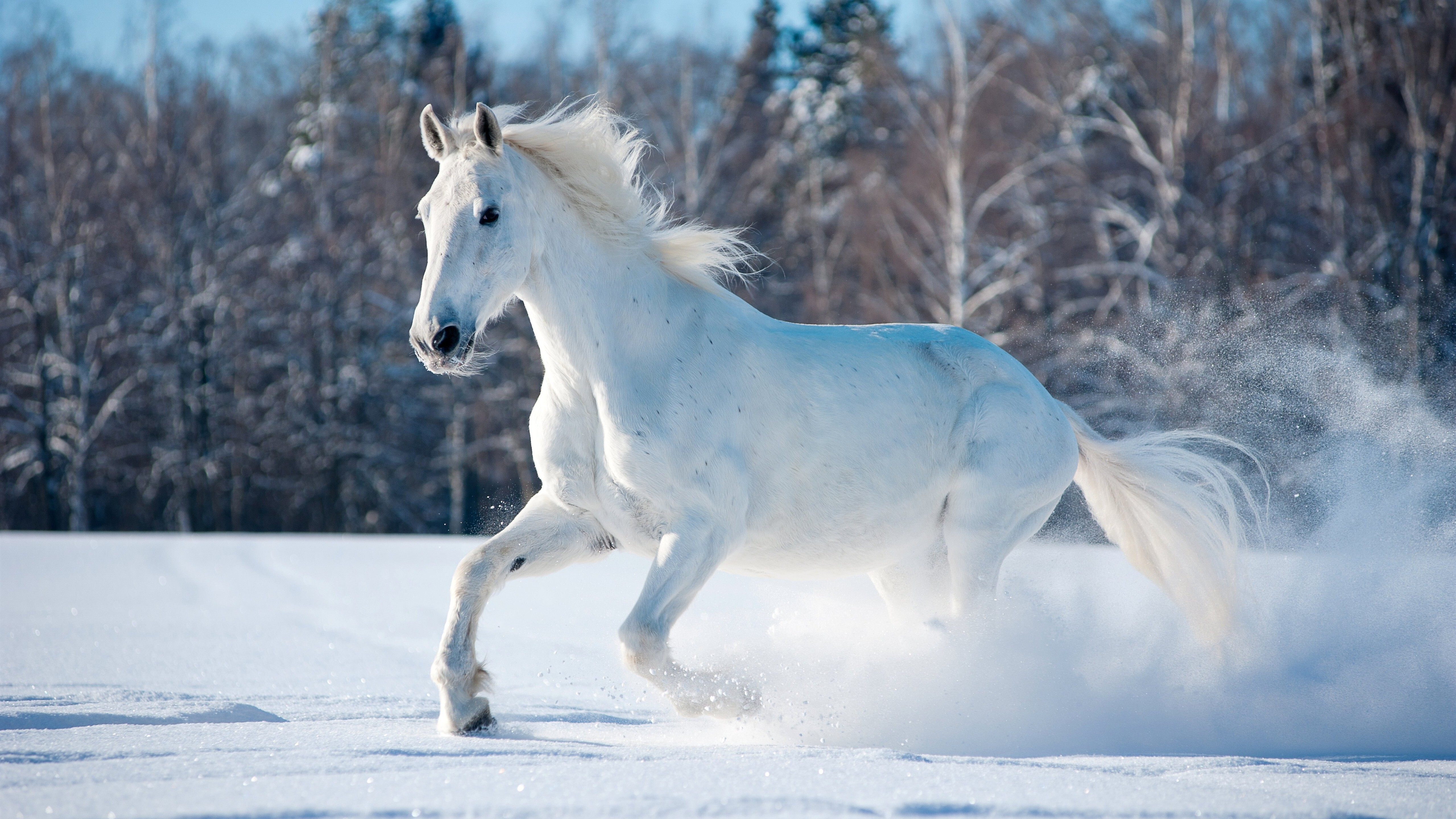 White Horse Running In Snow 5k Wallpaper Hd Wallpapers